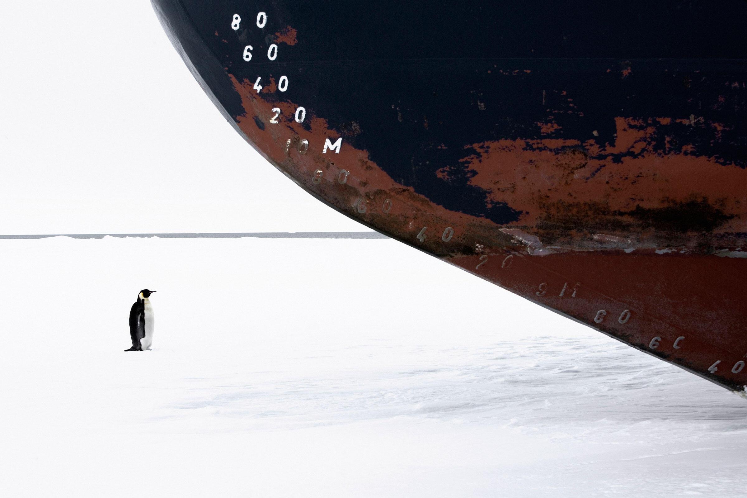 Emperor Penguin and ice breaker. Ross Sea, Antarctica. John Weller