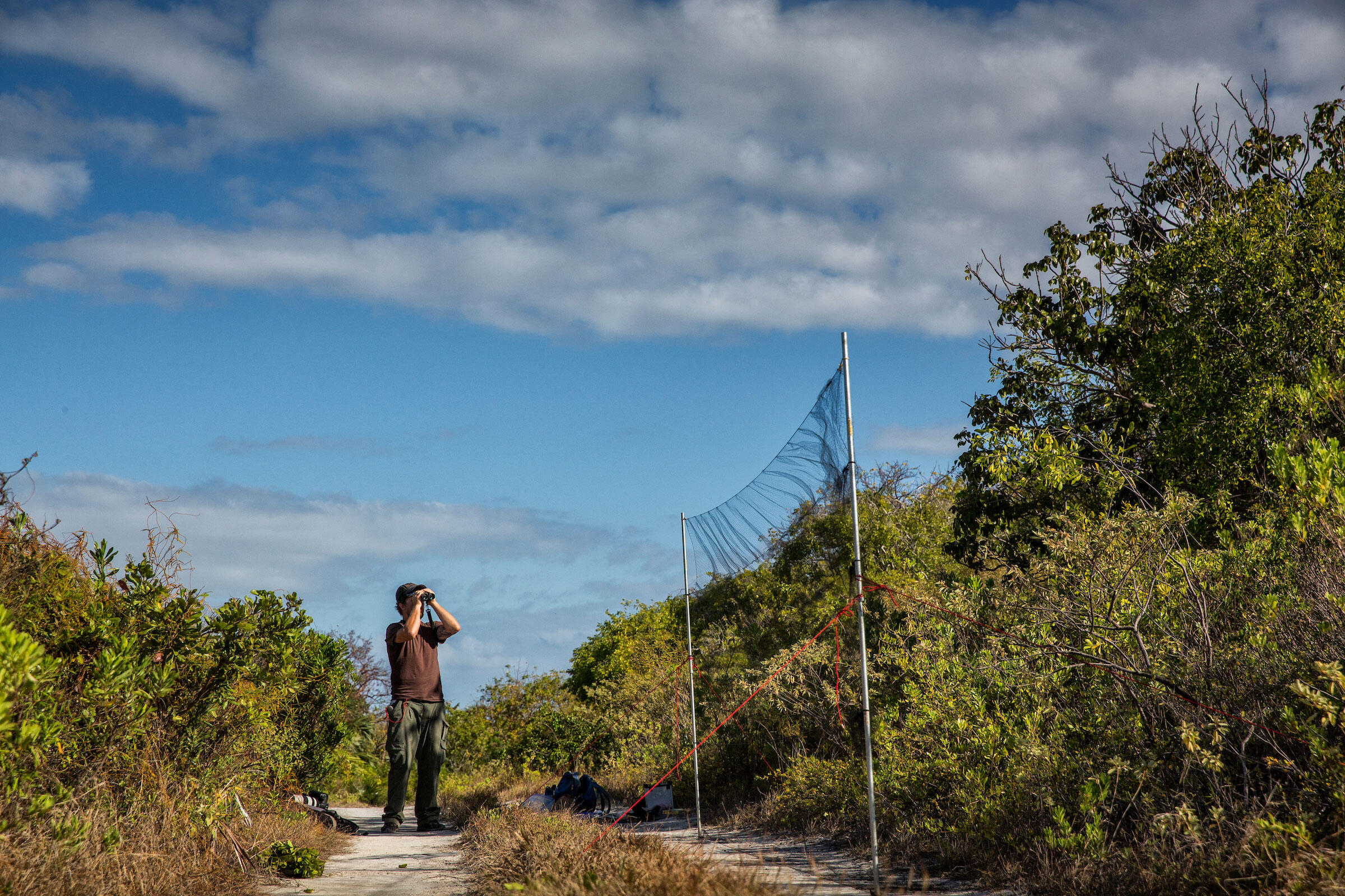 At sunrise, Smithsonian scientist Nathan Cooper plays a Kirtland's Warbler call to elicit a response from birds in the vicinity. This tips off his crew on where to set up a mist net to capture breeding individuals and deploy nanotags. Karine Aigner