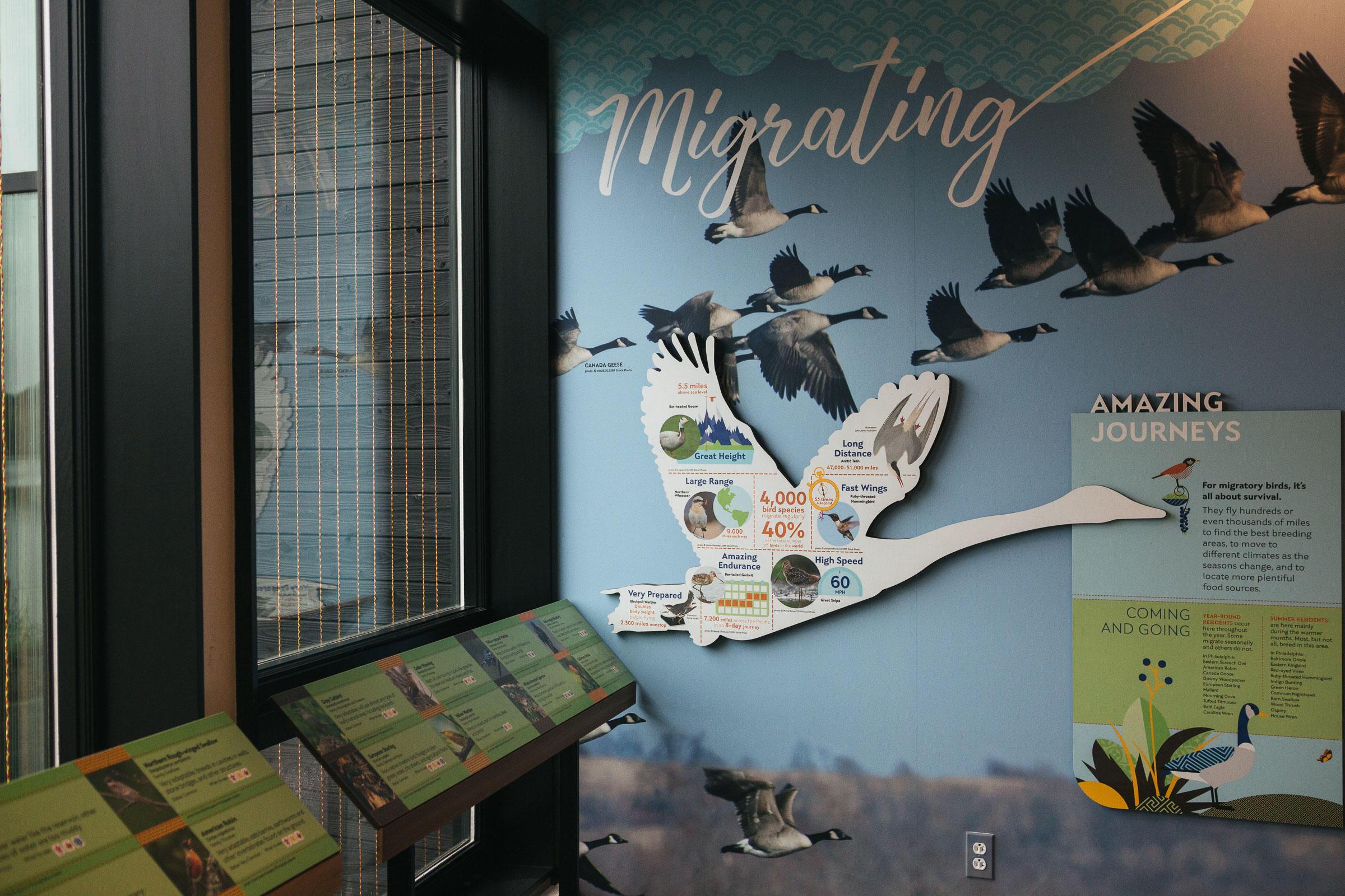 Strawberry Mansion Reservoir bird migration exhibit in The Discovery Center. Michelle Gustafson