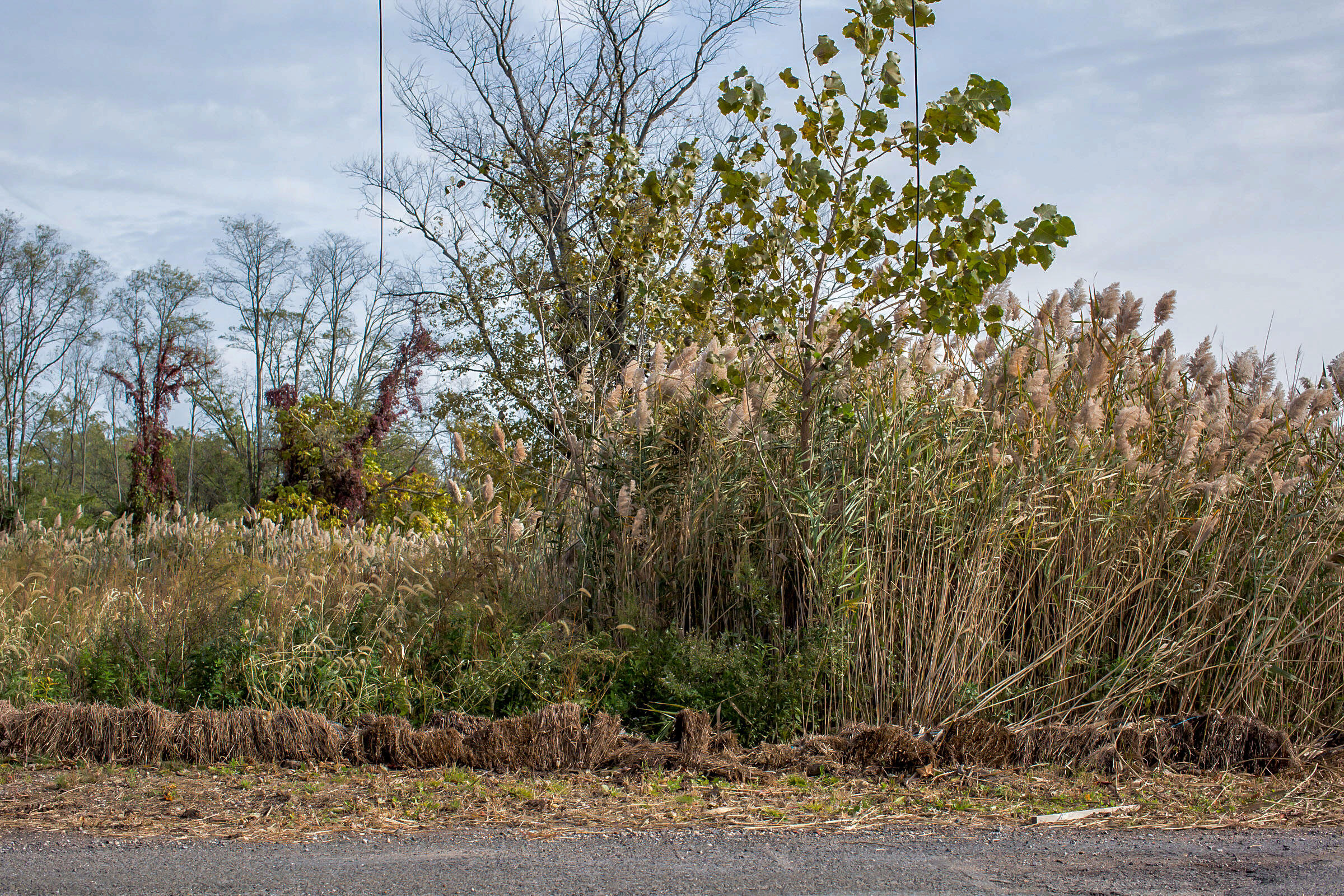 Two adjacent lots in different stages of regrowth: one demolished last year (left), and the other swept away by Hurricane Sandy (right). October 29, 2016. Hillary Eggers