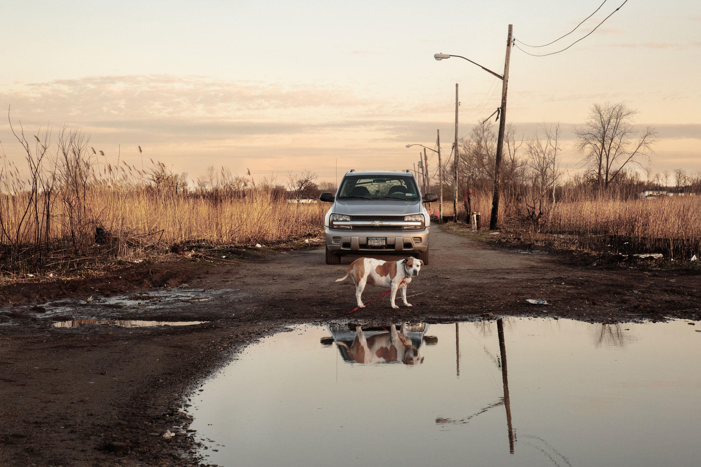 Baby, one of Franca Costa's rescue dogs, awaits her ride home down deserted Kissam Avenue, Oakwood Beach, Staten Island. April 14, 2016. Hillary Eggers
