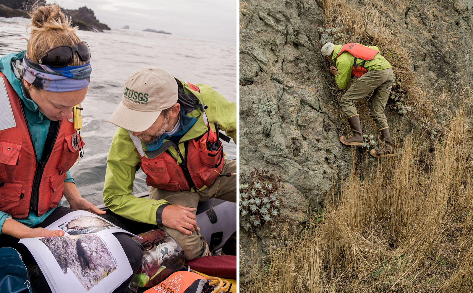 On small stacks of the coast of Northern California, the scientists check burrows for late-season chicks. Photos: Jim McAuley