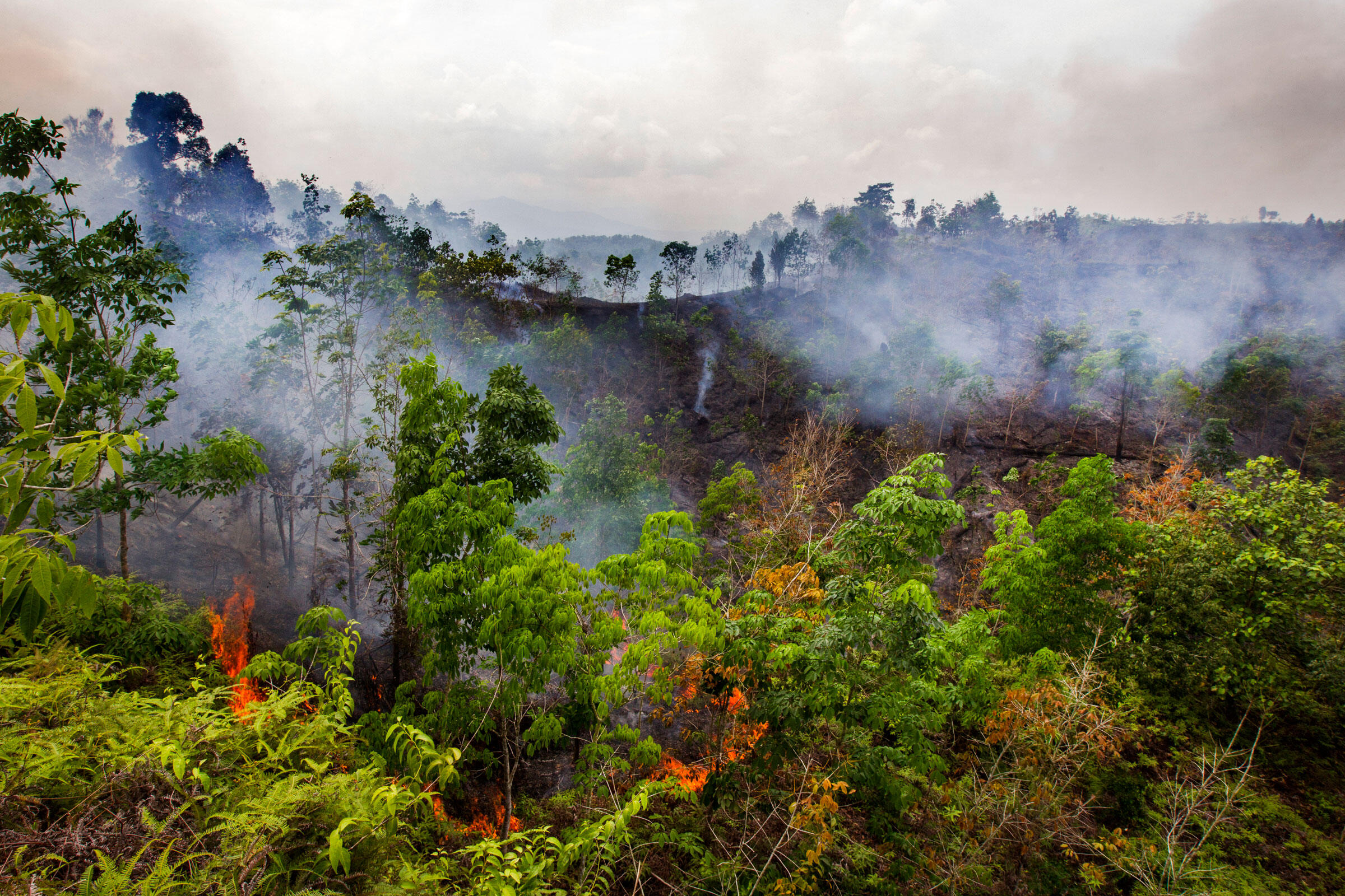Over the next few decades, fires in palm forests may result in 200 billion tons of CO2 being released into the atmosphere. Paul Hilton