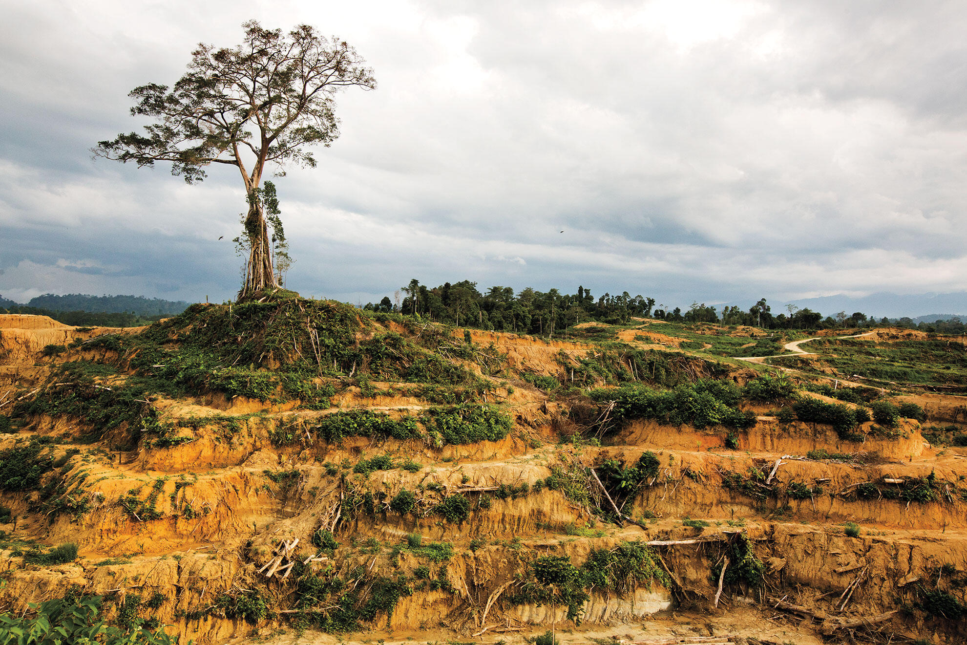 Newly cleared land in the Leuser Ecosystem attests to the weak enforcement of laws intended to protect this vital habitat. Paul Hilton