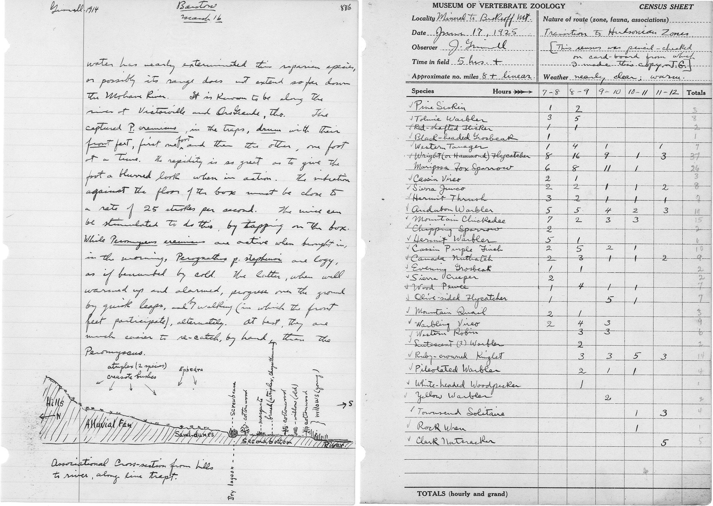 Escaneos: Cortesía de los Archivos del Museo de Zoología de Vertebrados, Universidad de California Berkeley
