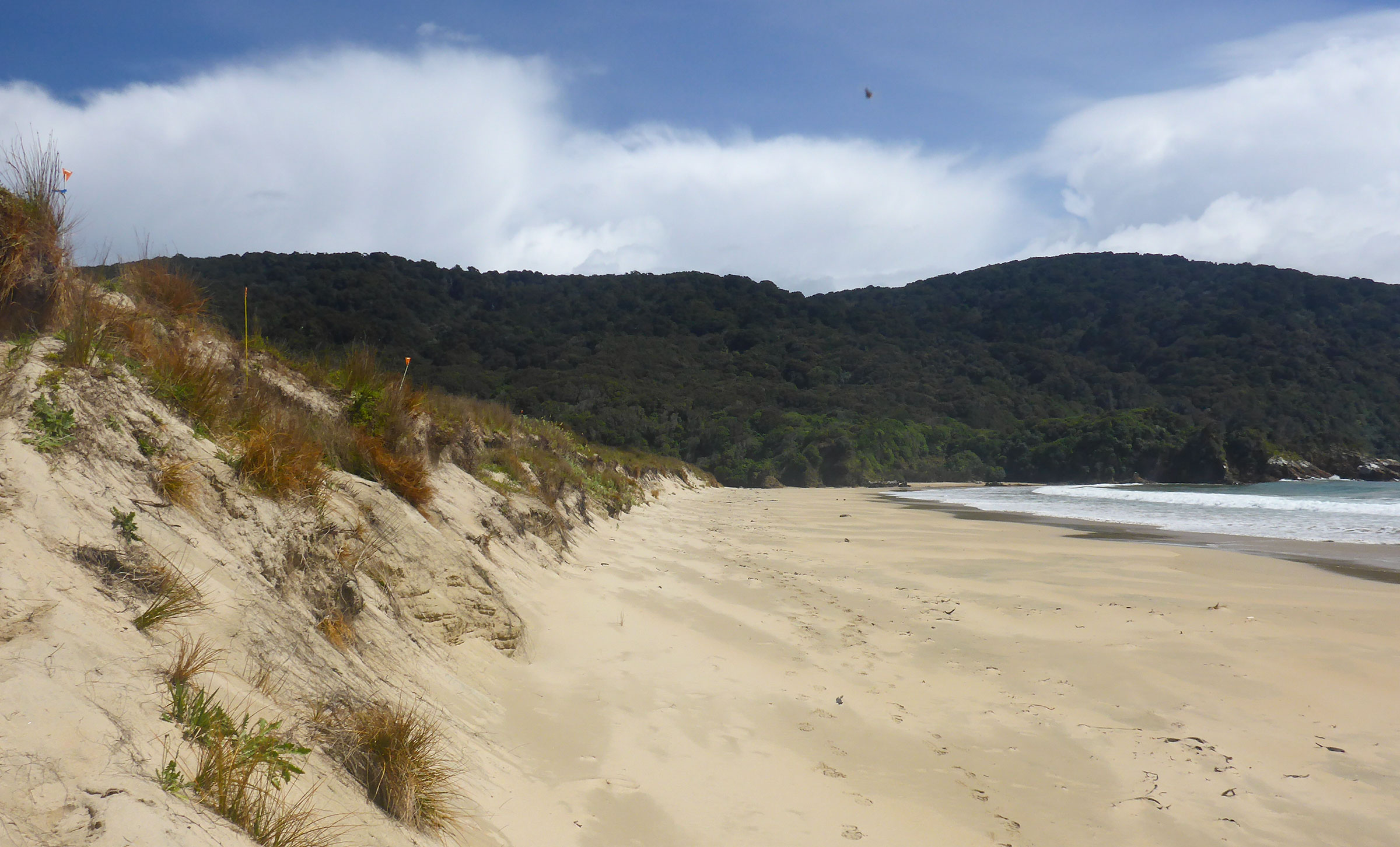 If you're on Codfish Island/Whenua Hou at the right time, you might see tiny winged potatoes shooting in and out of burrows in the sand dunes. Victor Anton