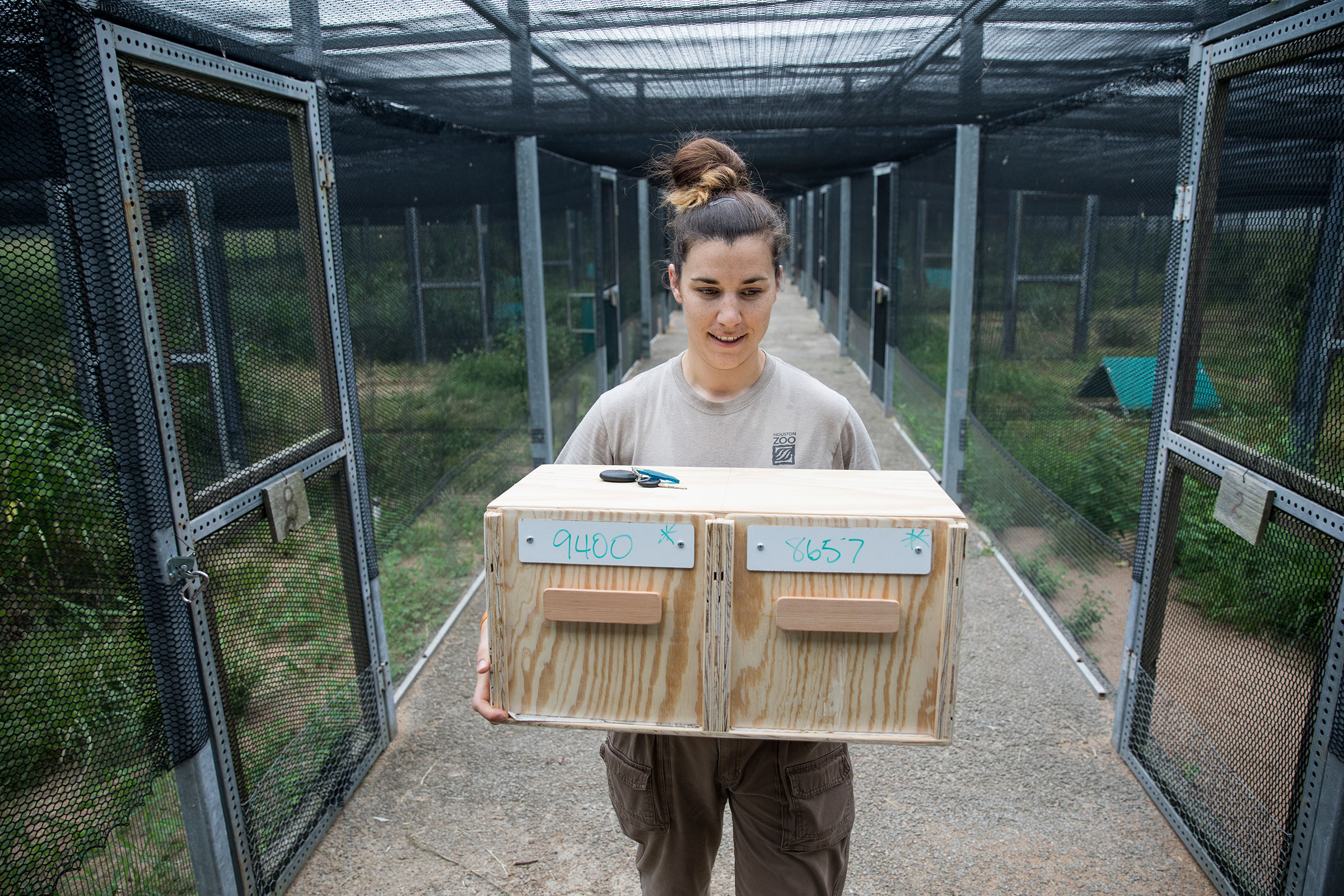 April Zimpel of the Houston Zoo carries a box containing Attwater's Prairie-Chickens ready for release. Scott Dalton