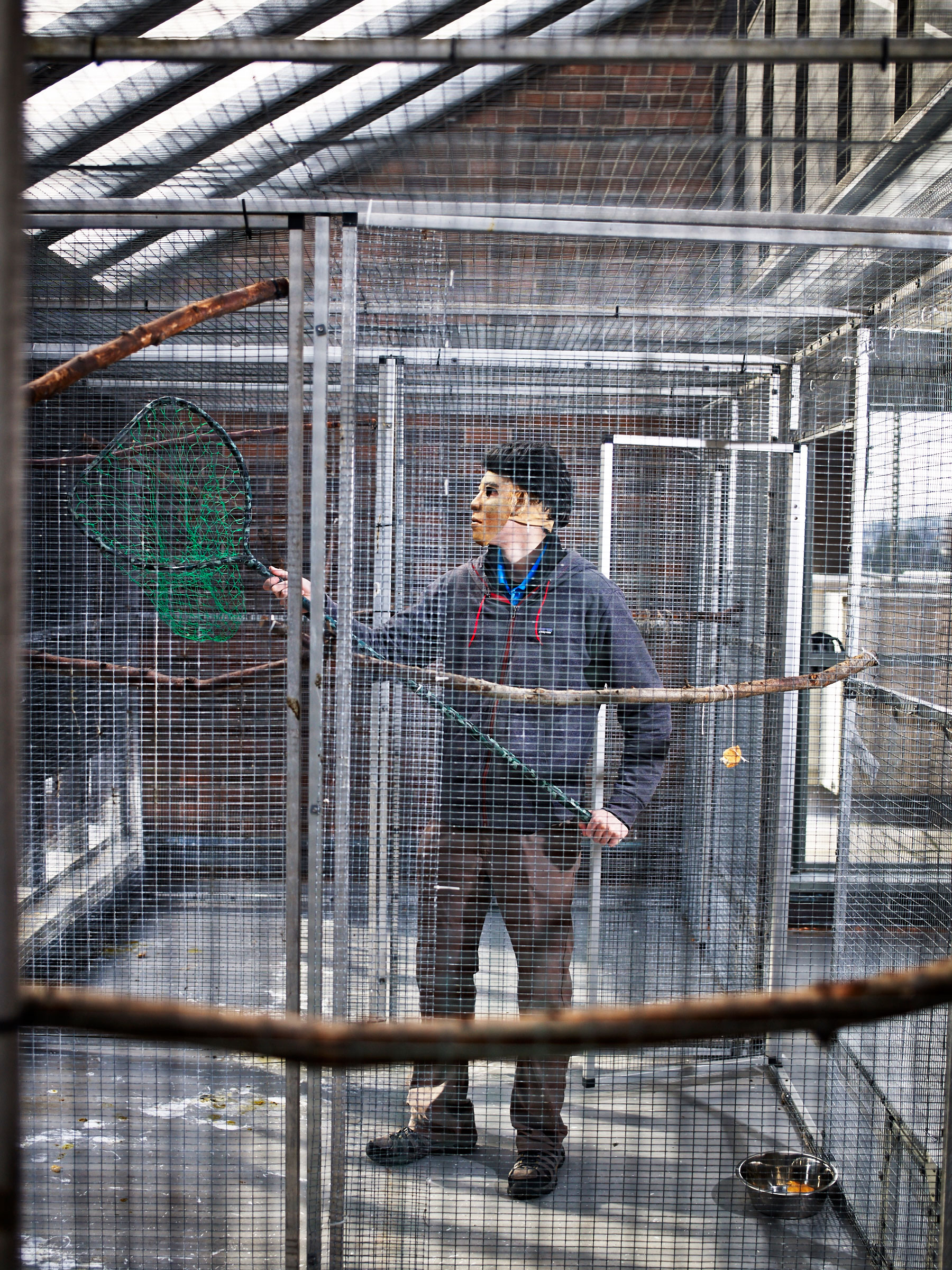 Grad student Loma Pendergraft wears a mask while catching a crow at an aviary at the University of Washington before preparing it for release. The bird and its mates have been at the facility for about two months. Andy Reynolds