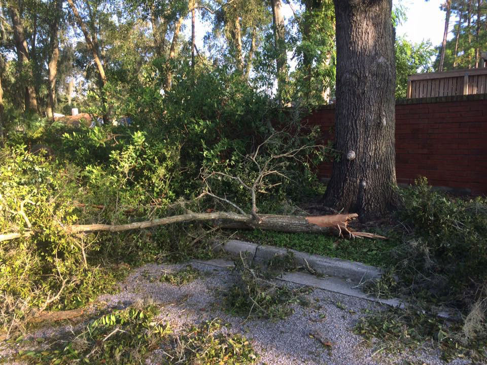 One of the downed trees at the Audubon Center for Birds of Prey, which is currently closed for cleanup after Hurricane Irma. Courtesy of Audubon Center for Birds of Prey