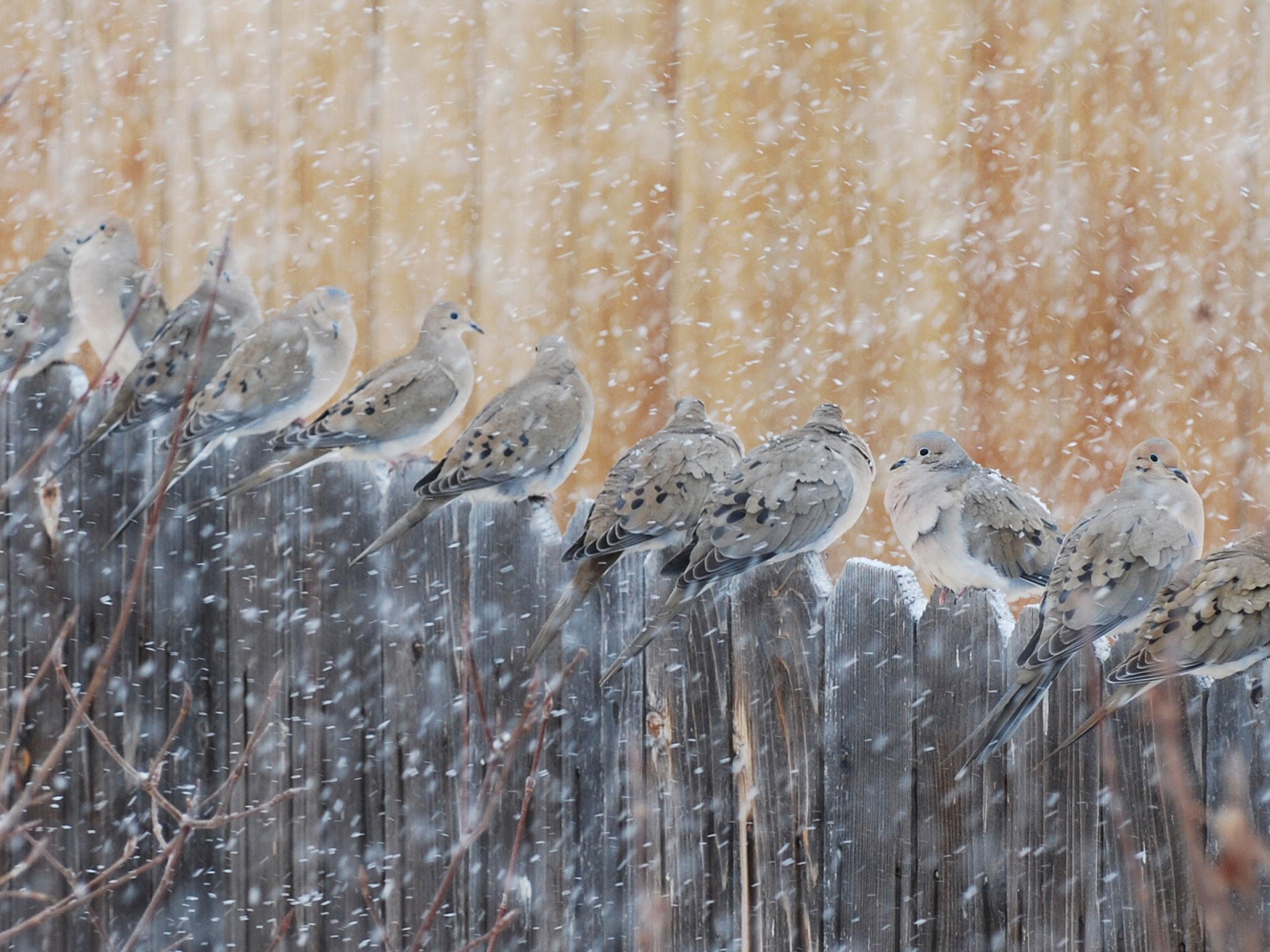 Mourning Doves. Kat Bradley Bennett/Audubon Photography Awards