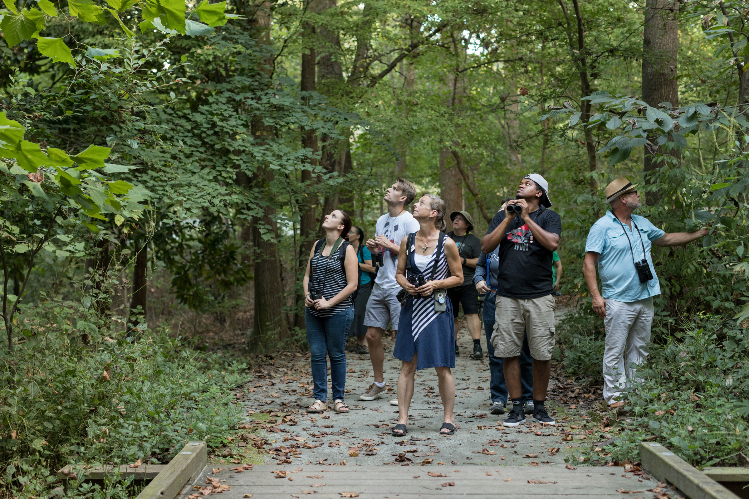 The author leads birders on an early evening walk to kick off Exhibitat. Sightings included a Cooper's Hawk and Red-eyed Vireo, but no Chimney Swifts. Jessie Parks