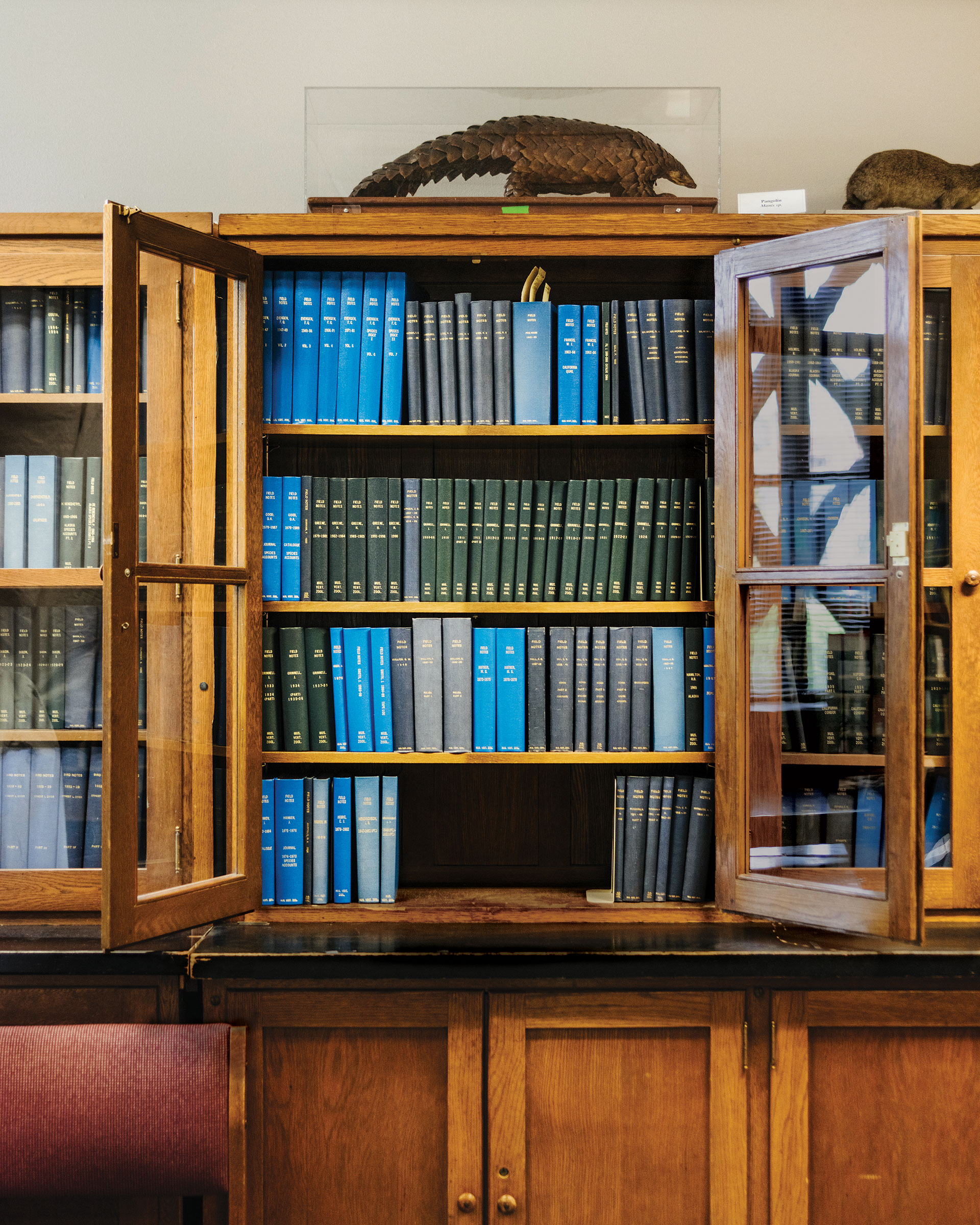Durante años, los científicos del museo celebraron reuniones de personal semanales frente a un tesoro oculto.