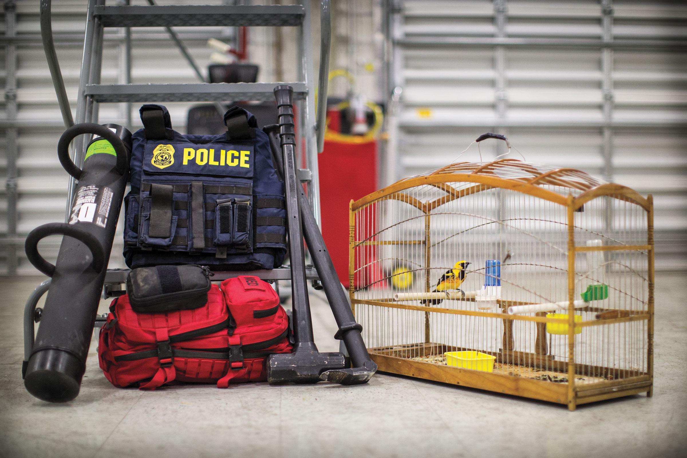 Los agentes usan chalecos protectores y mazas en operativos para confiscar las especies en protección, incluida la oropéndola de arriba.