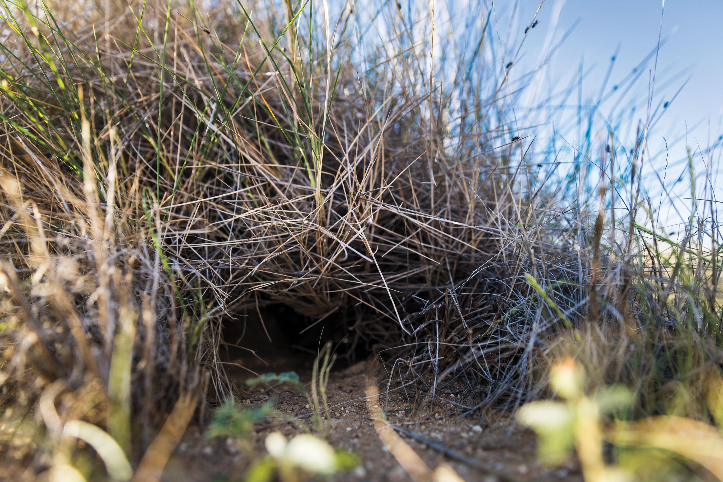 Los Pericos Nocturnos estaban cerca de un antiguo nido en Pullen Pullen a comienzos de este año.