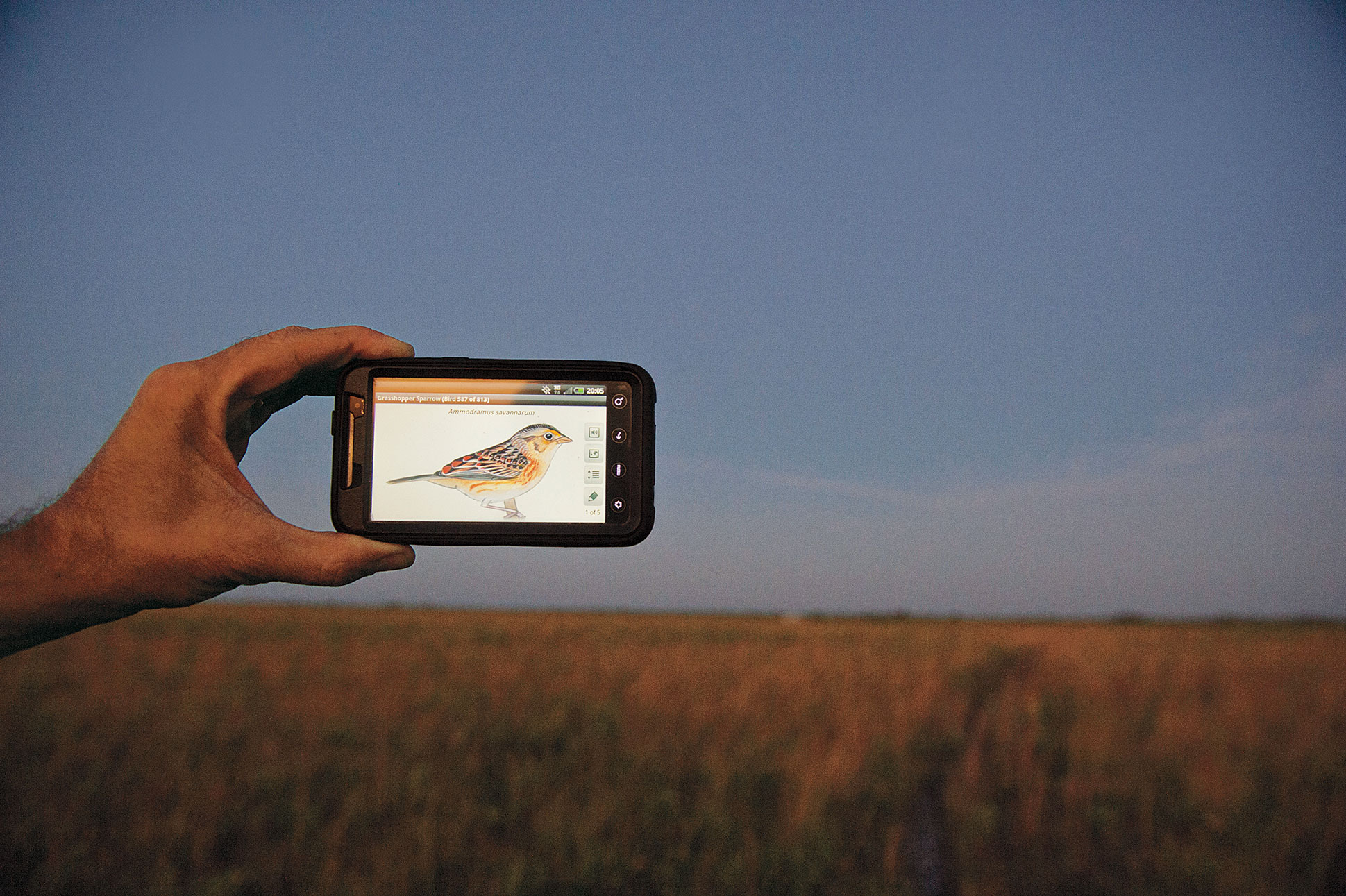 Paul Miller plays the Grasshopper Sparrow's song on an iPhone, hoping to lure a male to a mist net. Joel Sartore
