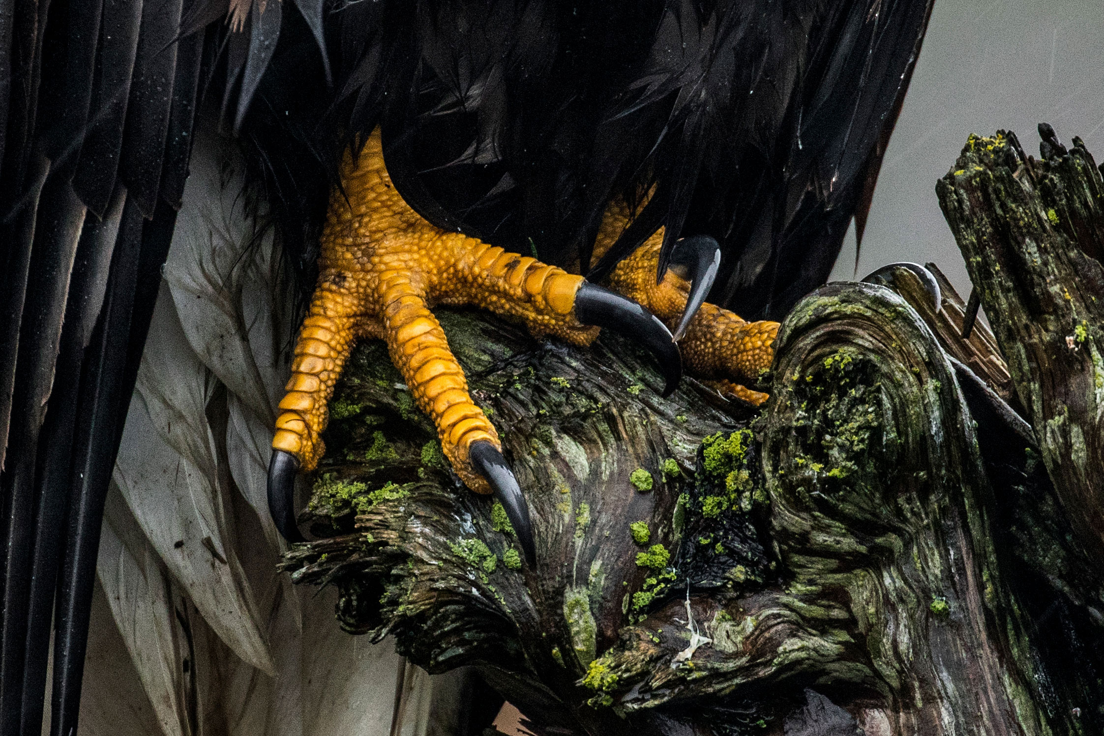 This shot of a Bald Eagle's talons wrapped around a gnarled stump snagged Gertsman the Youth Honorable Mention spot. Liron Gertsman/Audubon Photography Awards