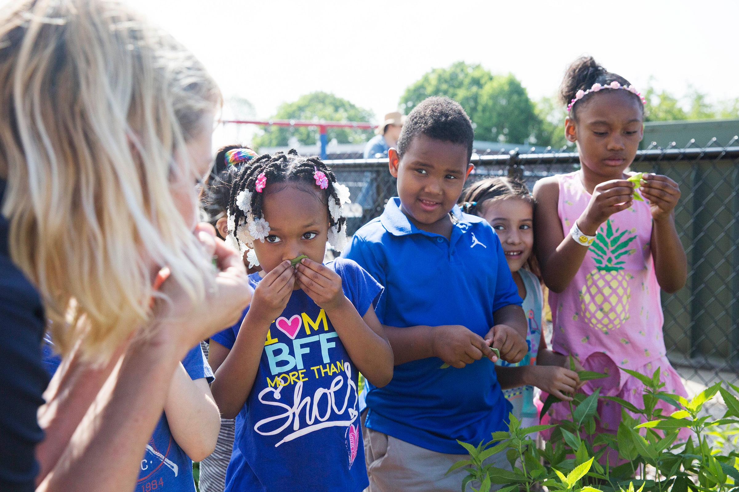 Barron and the students at the Mussleman Kindergarten Center smell native mountain mint. Rachel Wisniewski