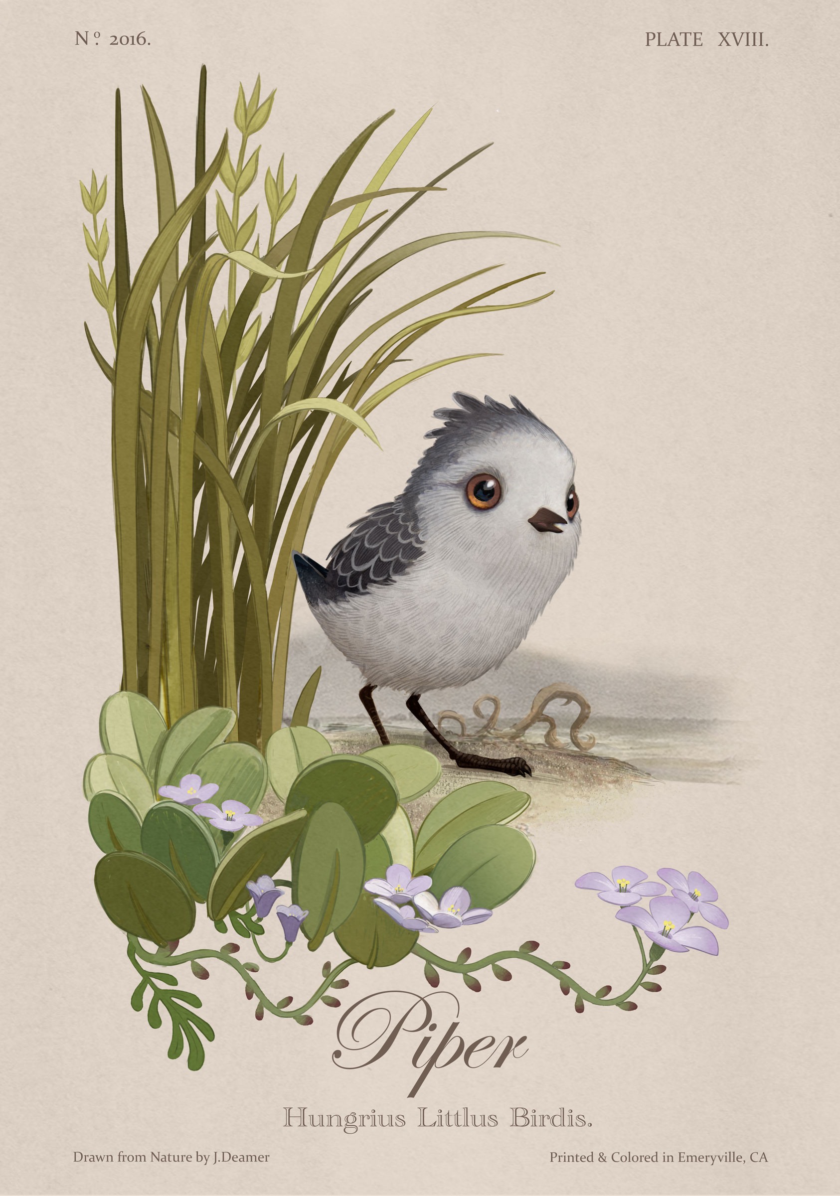 Piper as an Audubon-style print. Disney•Pixar