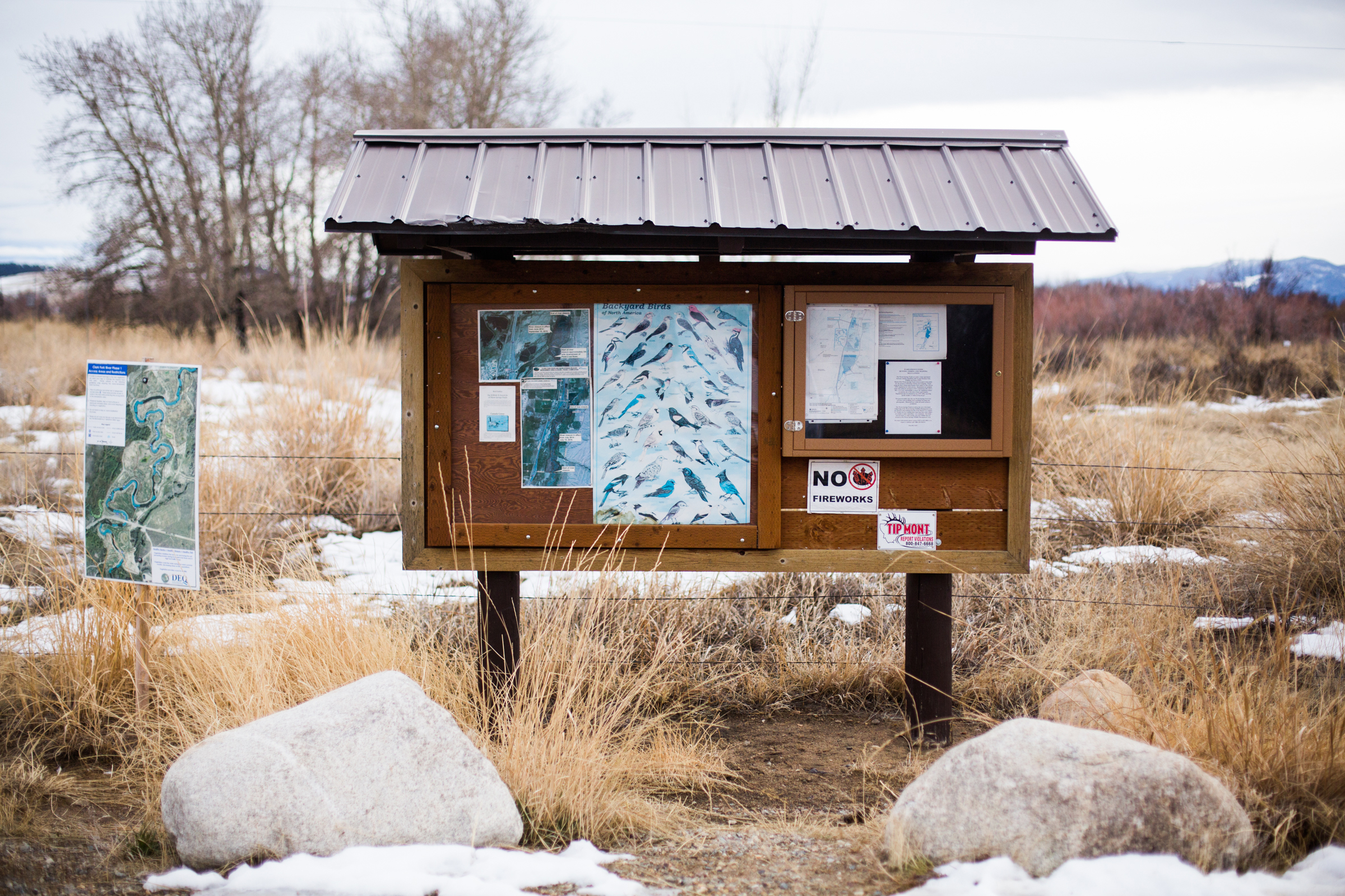 In November 2016, the waters at Warm Springs Ponds, an occasional white-goose stopover 20 miles north of Butte, were frozen, which may have pushed the birds on to the Berkeley Pit. Celia Talbot Tobin