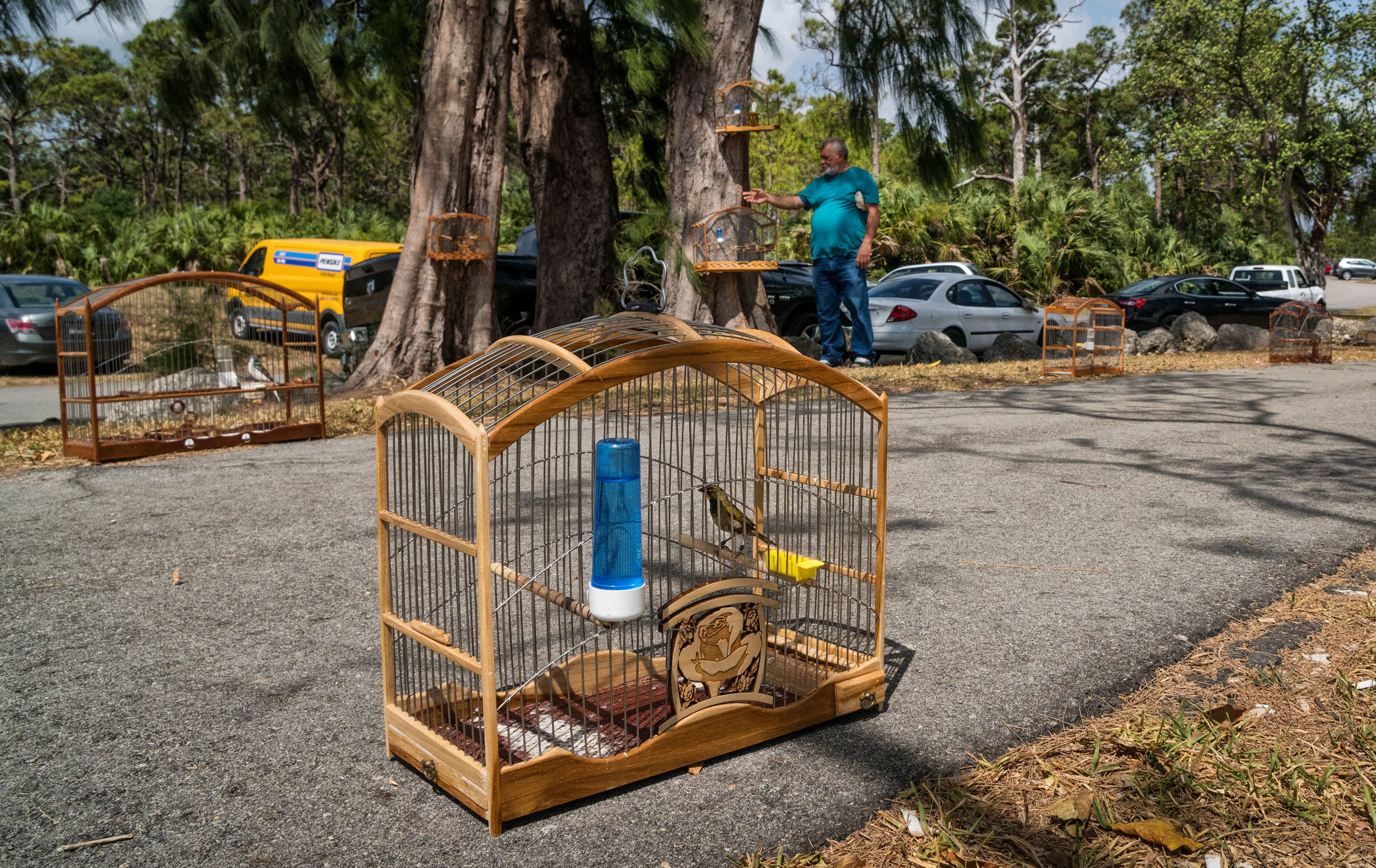 Traders gather along a road in a public park near Miami to display and sell birds. Karine Aigner