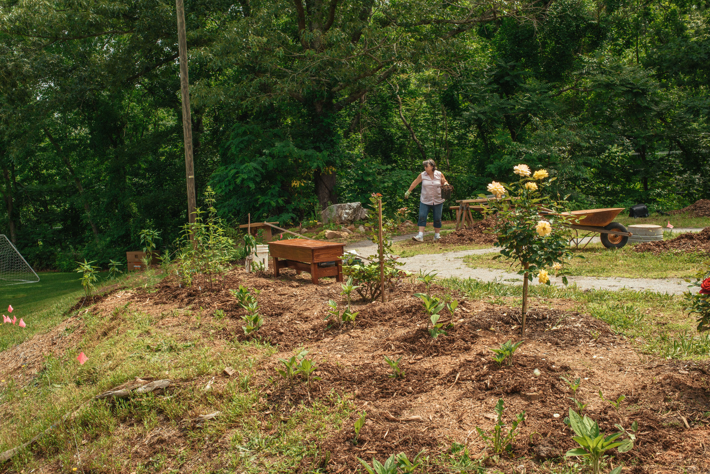 The garden will host 300 bird and pollinator-friendly plants by the time the project is done. Mike Belleme