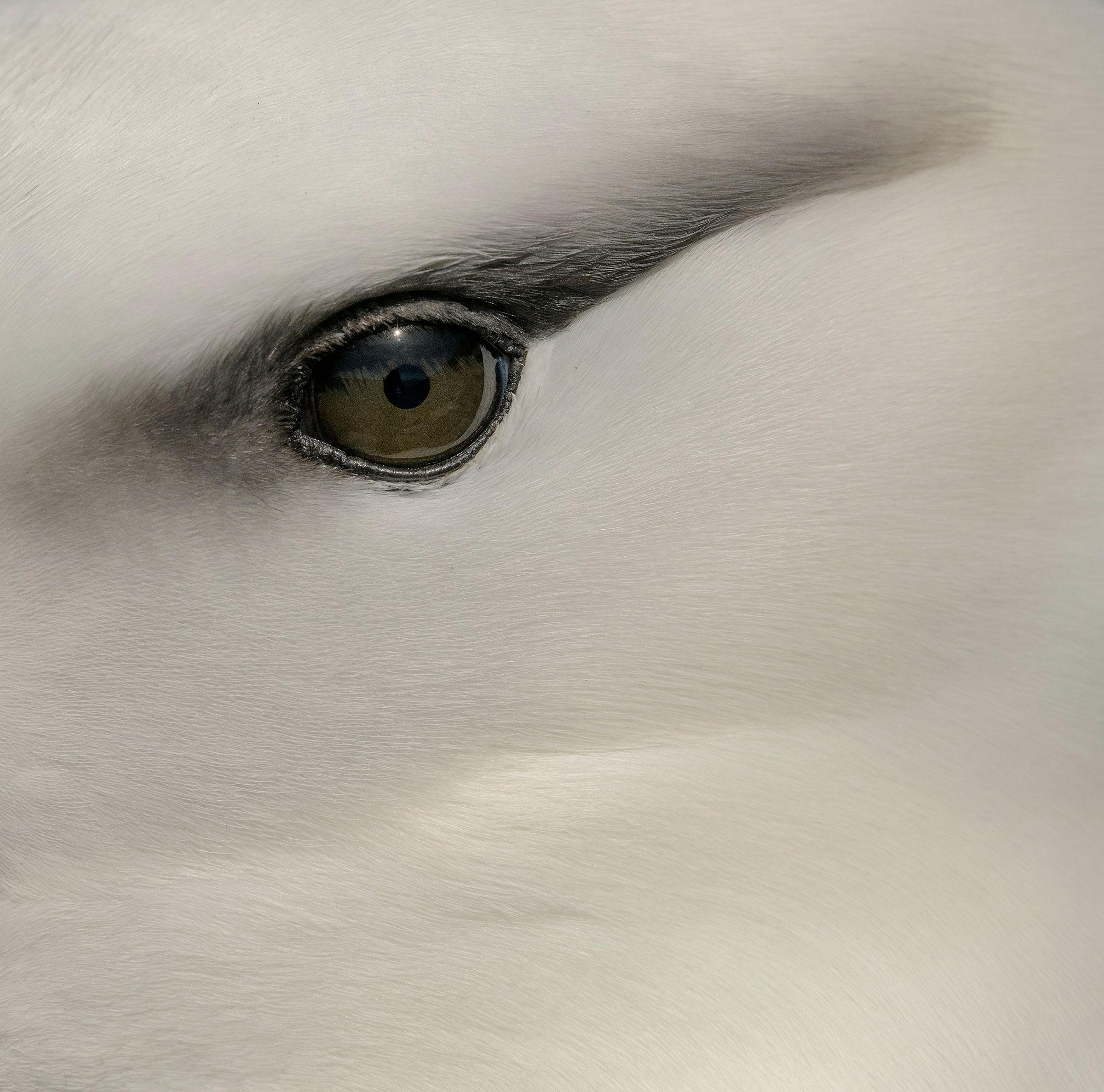 Black-browed Albatross. Ly Dang/Audubon Photography Awards