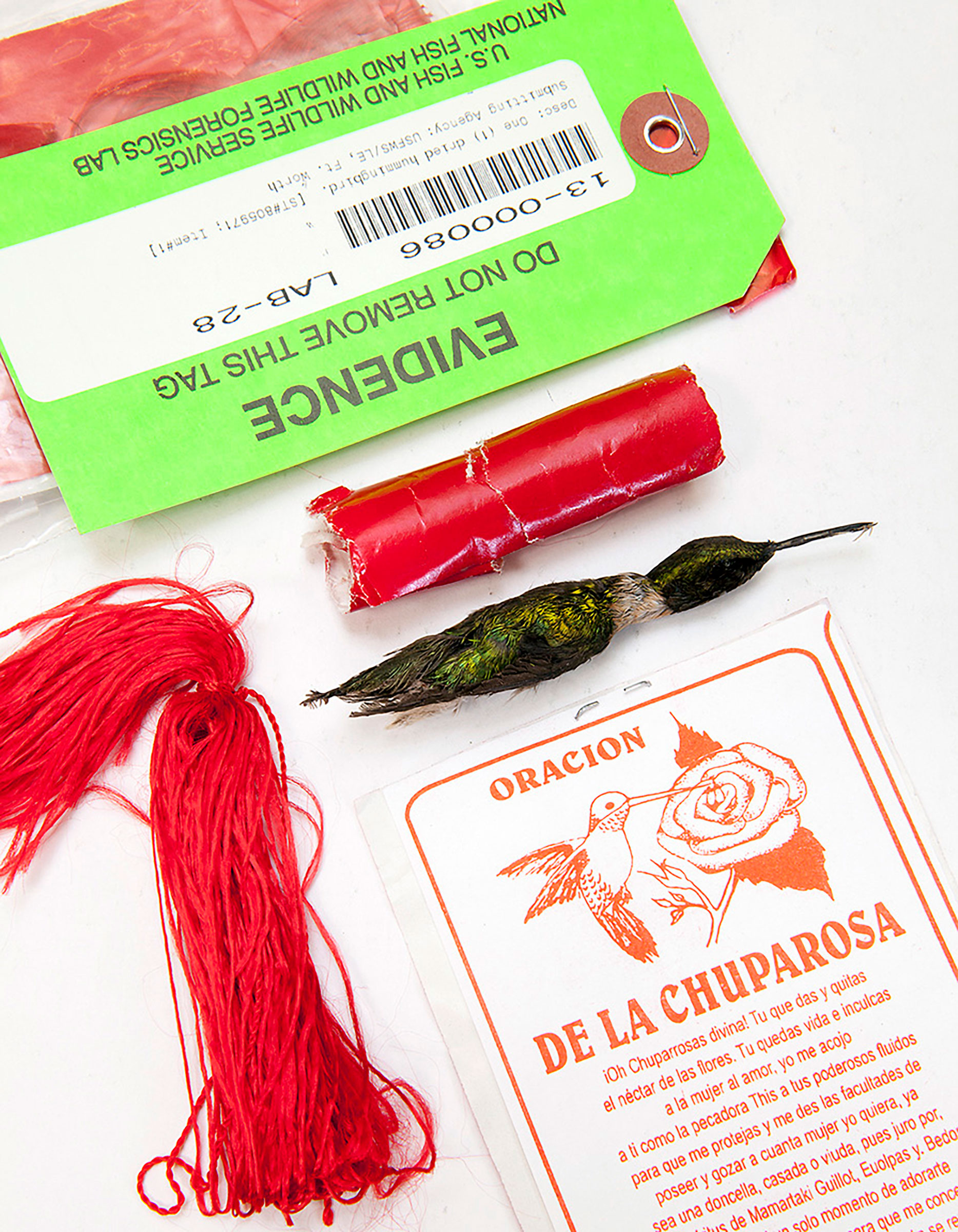 This chuparosa, seized in a sting operation, was packaged with the Prayer of the Hummingbird, a plea to bring the recipient love. Tom Fowlks