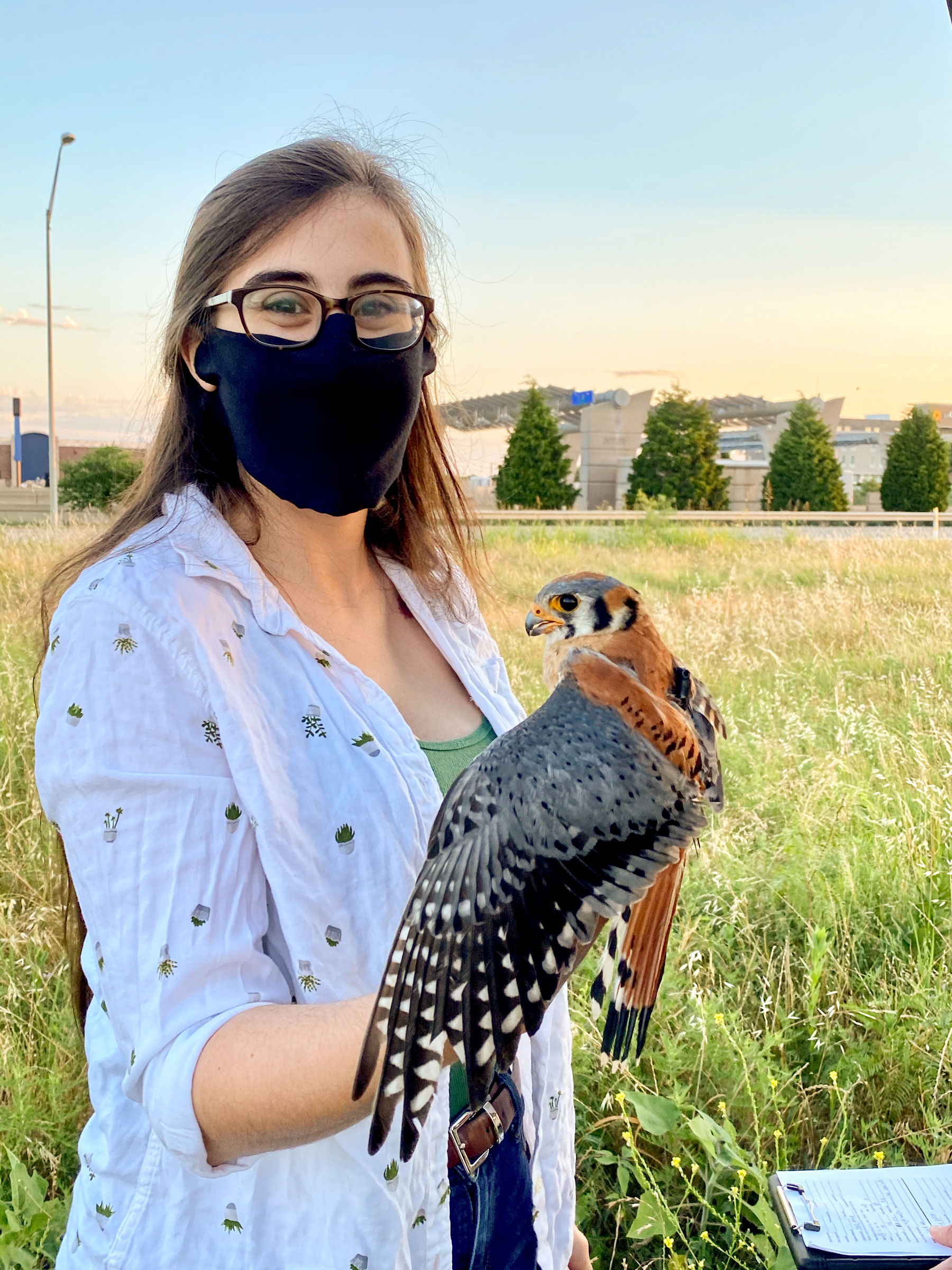 """Biles and her team were able to catch one kestrel in June of 2020, seen here. """"This kestrel happened to be a year-round resident, which was unknown at the time of his initial capture and attachment of his tracker,"""" said Biles. Heather Bullock"""