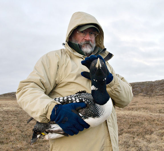 Jeff Fair in the NPR-A just southwest of Teshekpuk Lake, holding a Yellow-billed Loon. Photo: Ken Wright