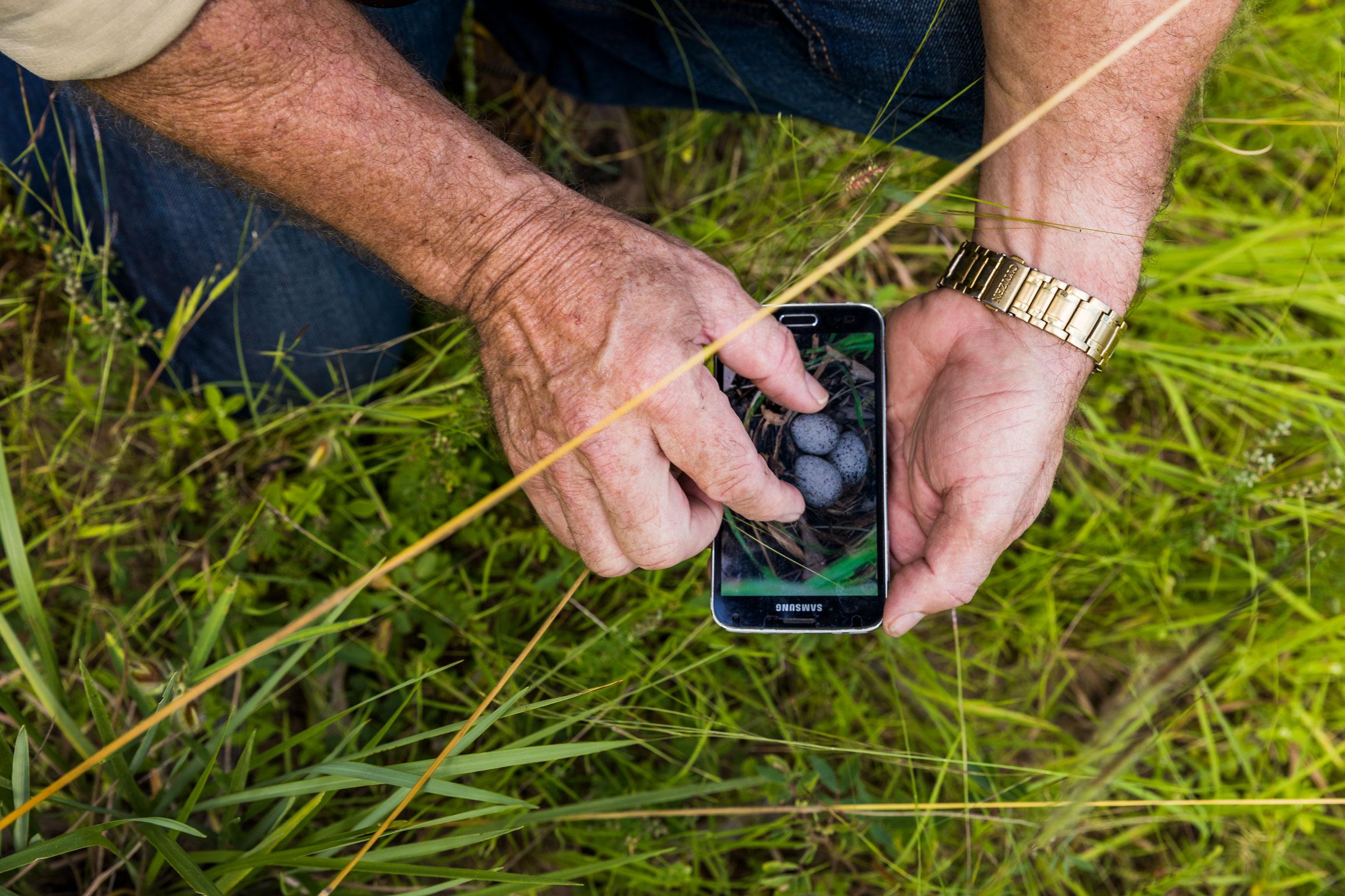 Young mostrando su foto de un puñado de huevos de Torillos de Robinson junto a pastizal similar en Brooklyn Sanctuary de Australian Wildlife Conservancy.
