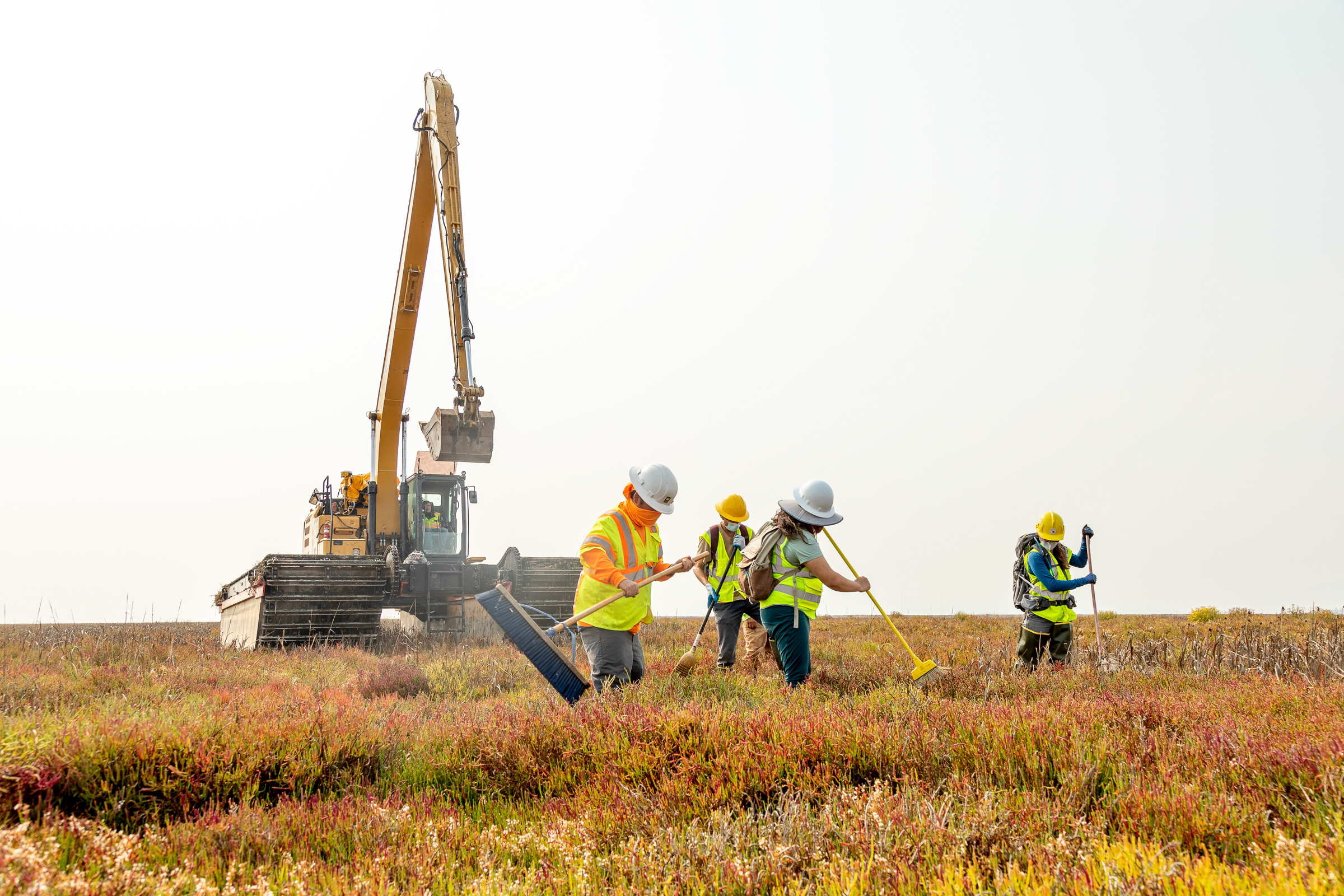 Workers sweep for wildlife while the machinery is moved through the marsh. Luciane Coletti