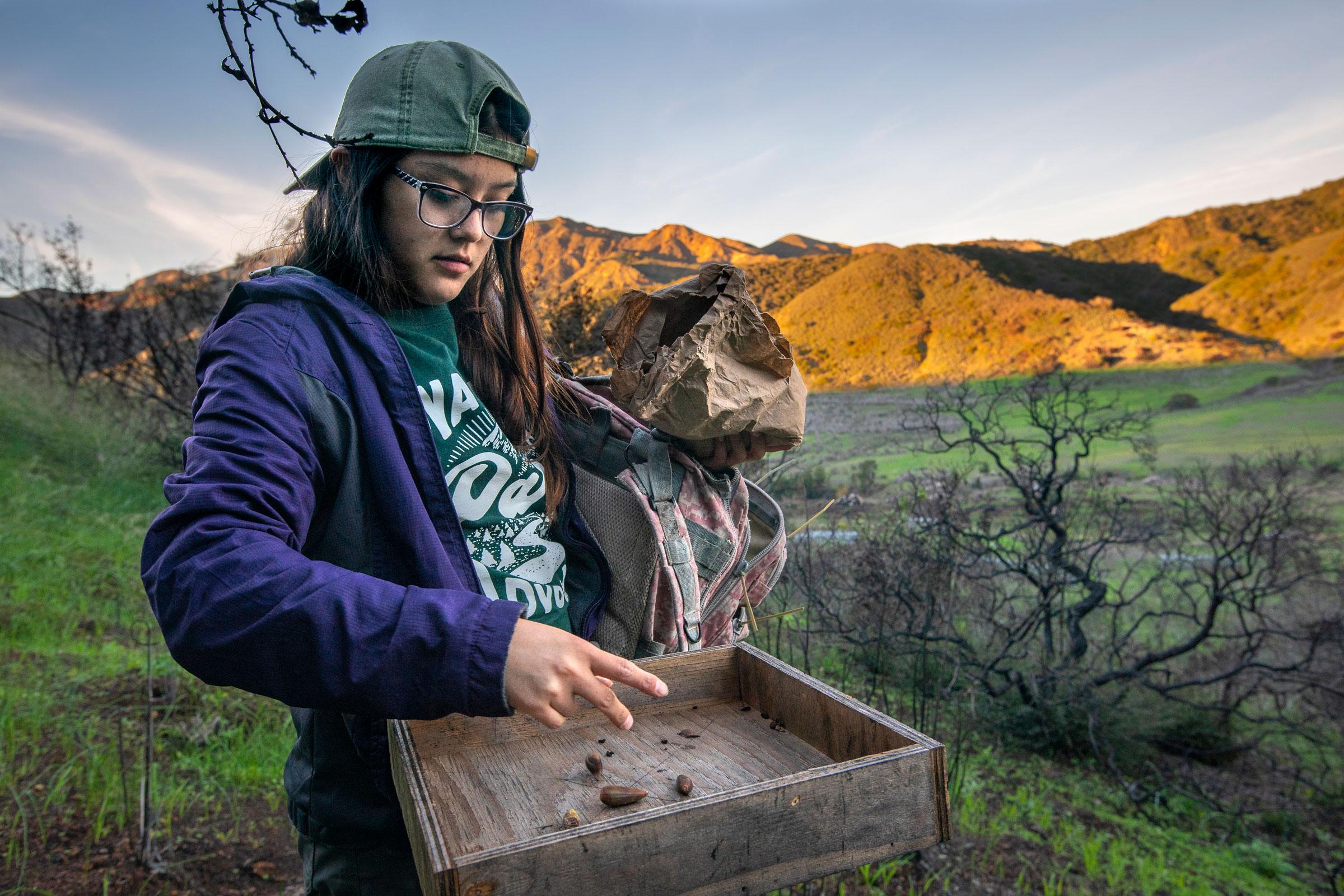 Rivera drops acorns onto a feeder. Morgan Heim