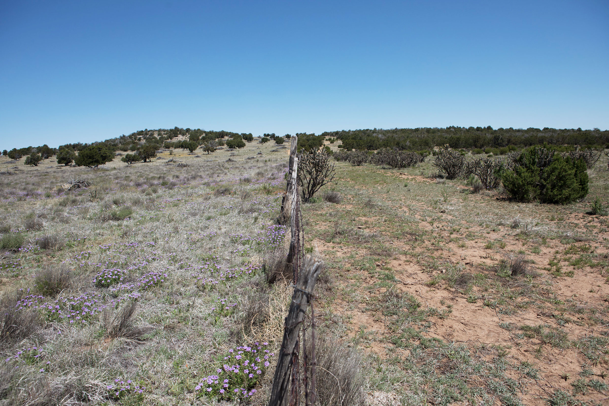 A fence line bordering the property of rancher Nancy Ranney (left) shows how rotational grazing spurs native grasses and wildflowers, while ungrazed land boasts far less diversity. Minesh Bacrania