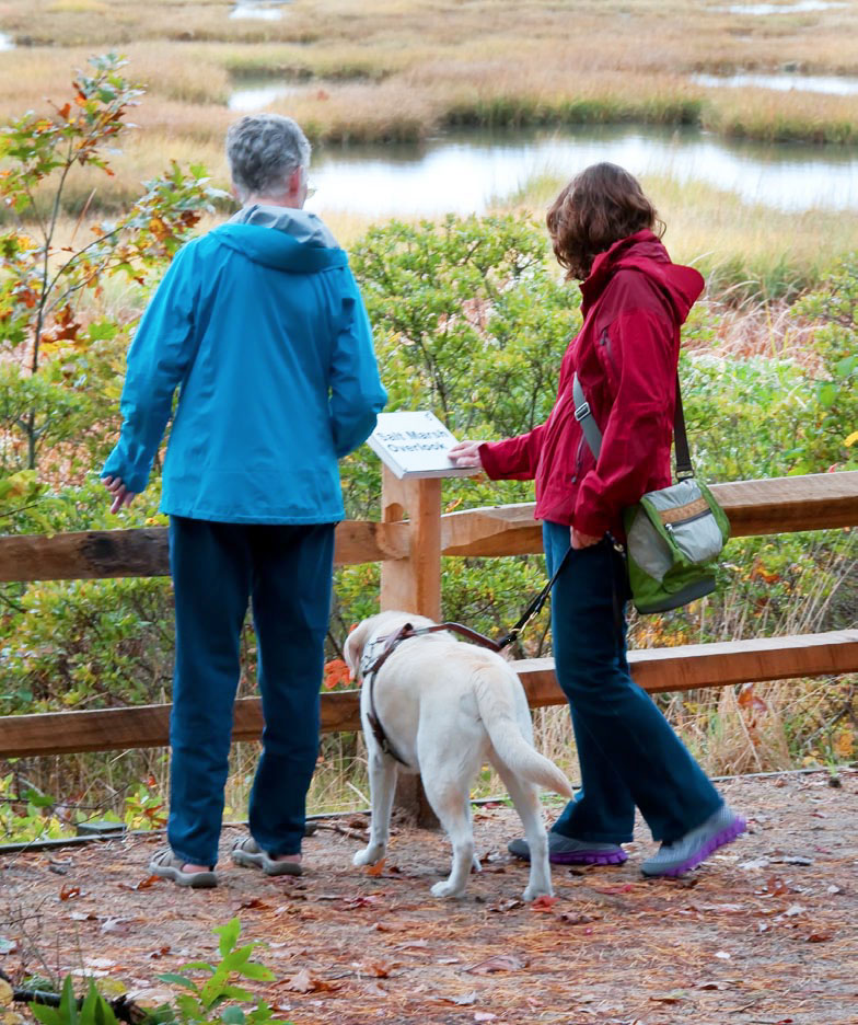 A photograph of two people looking out onto a saltmarsh on the All Persons Trail at Wellfleet Bay Wildlife Sanctuary on Cape Cod. Courtesy of Mass Audubon