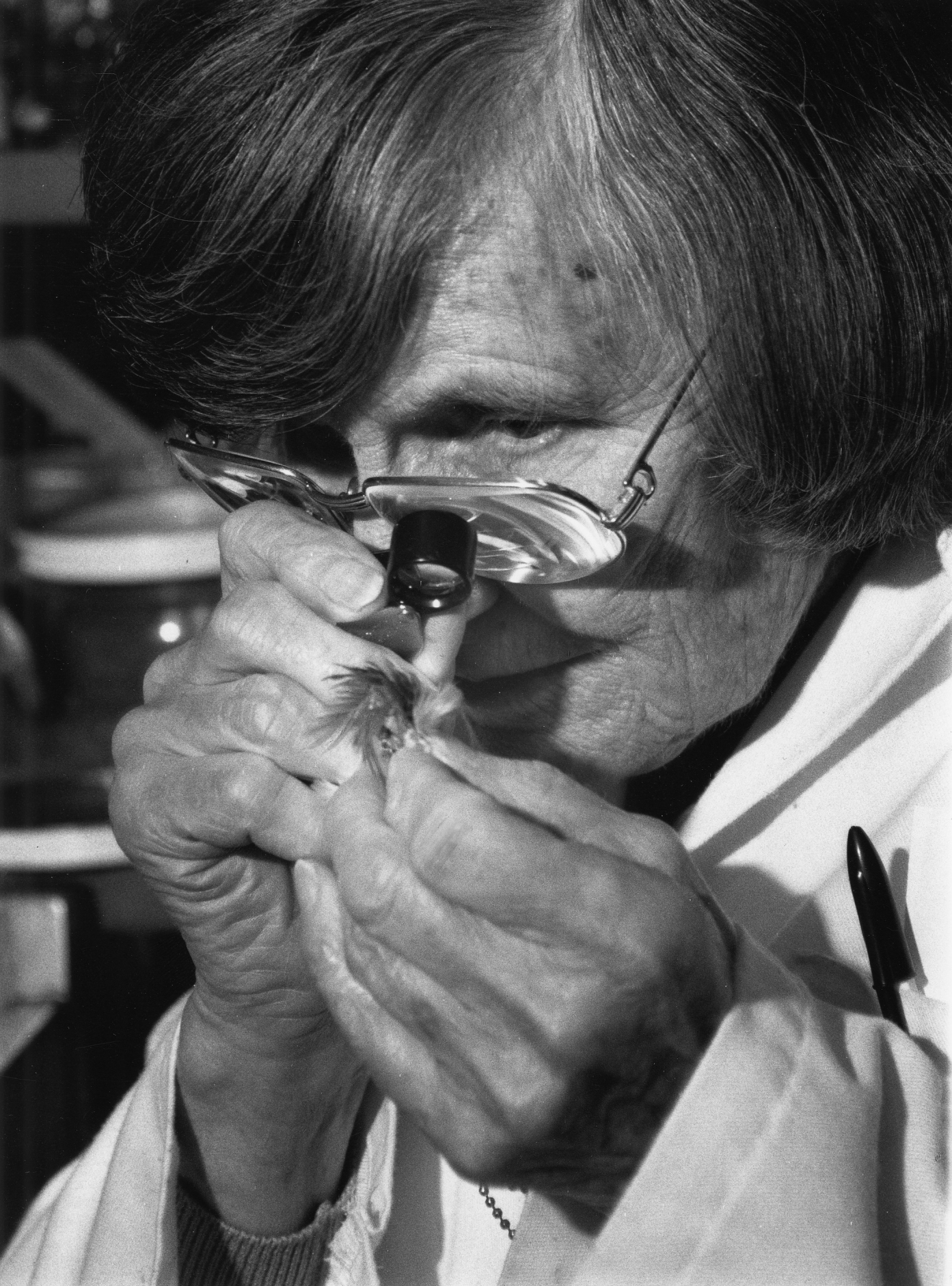Laybourne examines downy barbules in the Birds Division at the Smithsonian Institution National Museum of Natural History. Courtesy of Smithsonian Institution Archives
