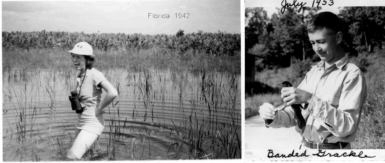 From left: Teedy Bergstrom venturing through a Florida swamp in the 1940s; Alex Bergstrom banding a grackle in 1953. Photos: Courtesy of Liz Bergstrom