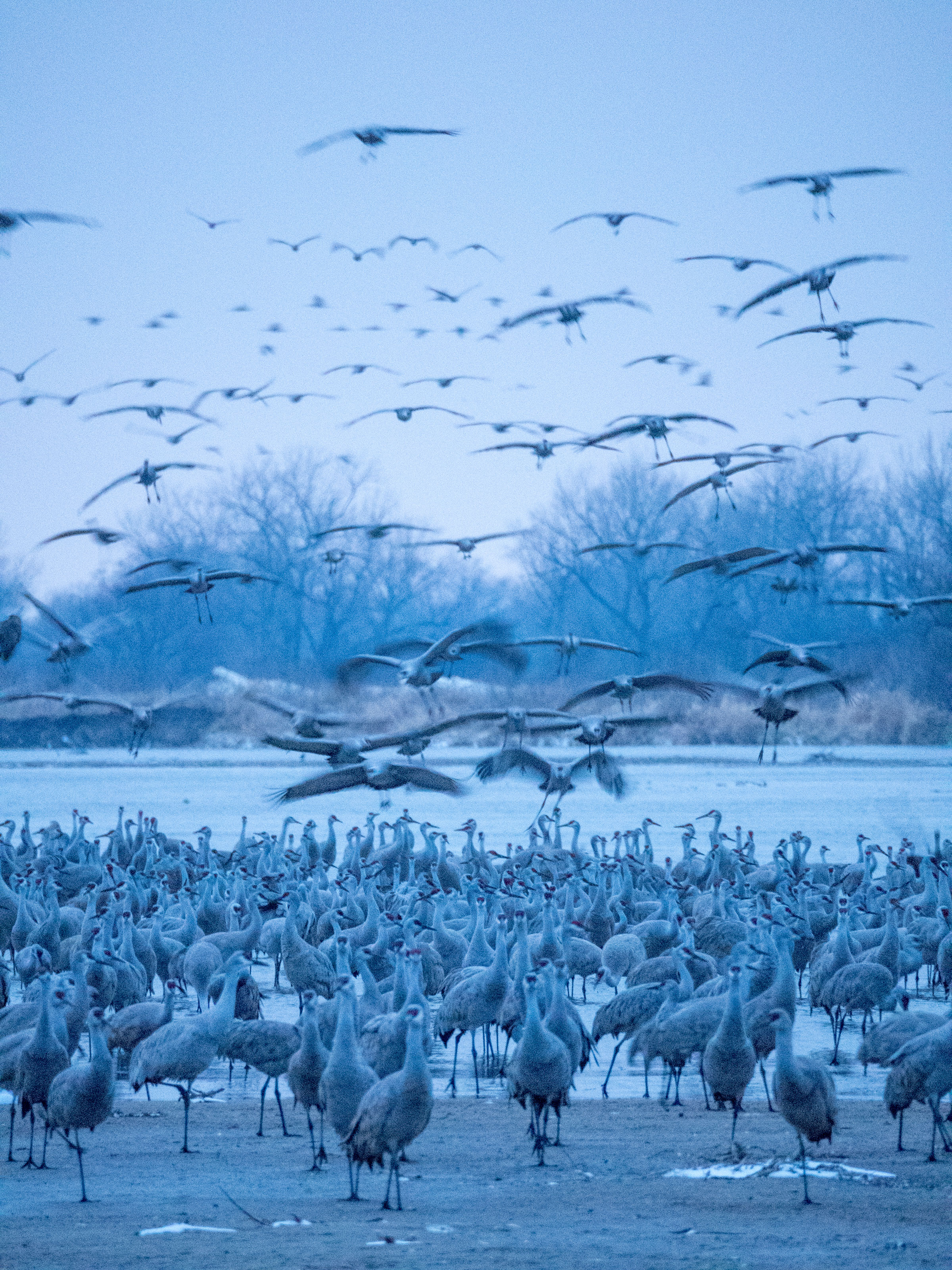 As the sun dipped below the horizon, flocks of the birds continued to touch down and congregate along the river. Preeti Desai/Audubon