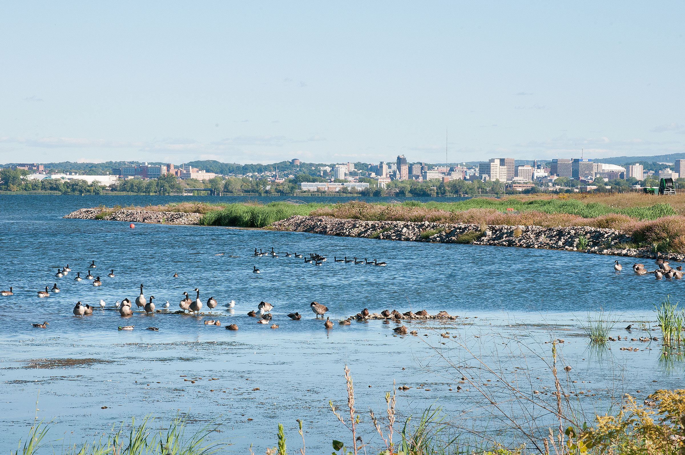 Replanting historical marsh and cattails has resulted in an influx of bird species at the once-abandoned Superfund site. Michele Neligan