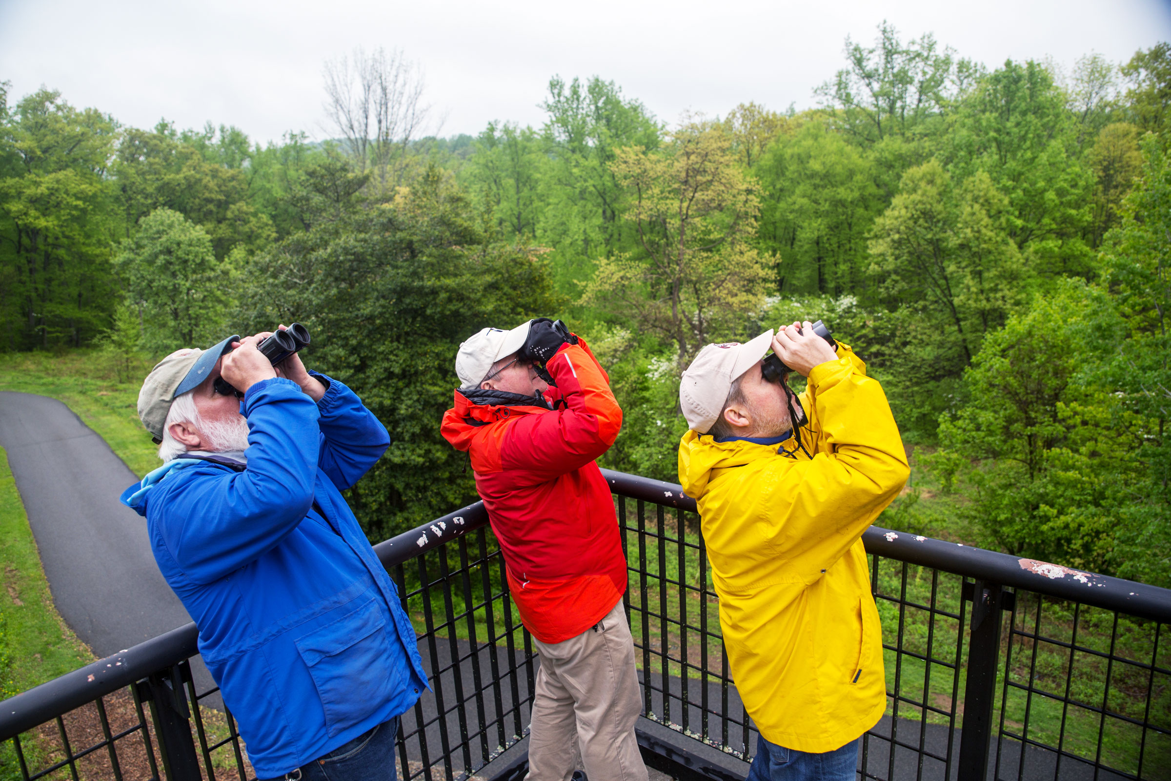 The Deckcissels spent hours like this, staring intently at the sky and into the surrounding vegetation. The pin oak (not pictured) that grows next to the observation platform was a total warbler magnet. Camilla Cerea/Audubon