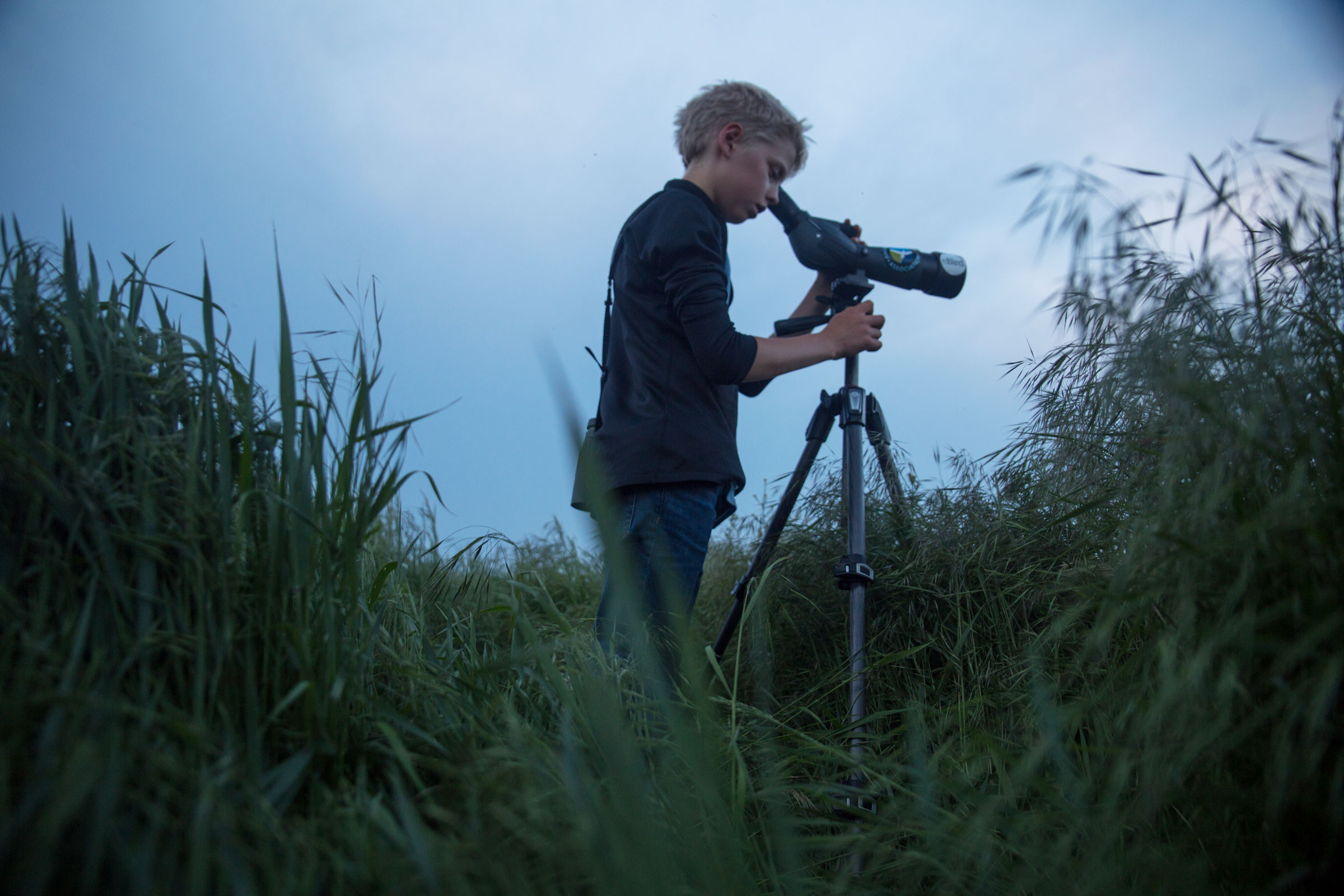 Jonathan Irons looks for an American Woodcock at dusk in Cape May. Camilla Cerea/Audubon