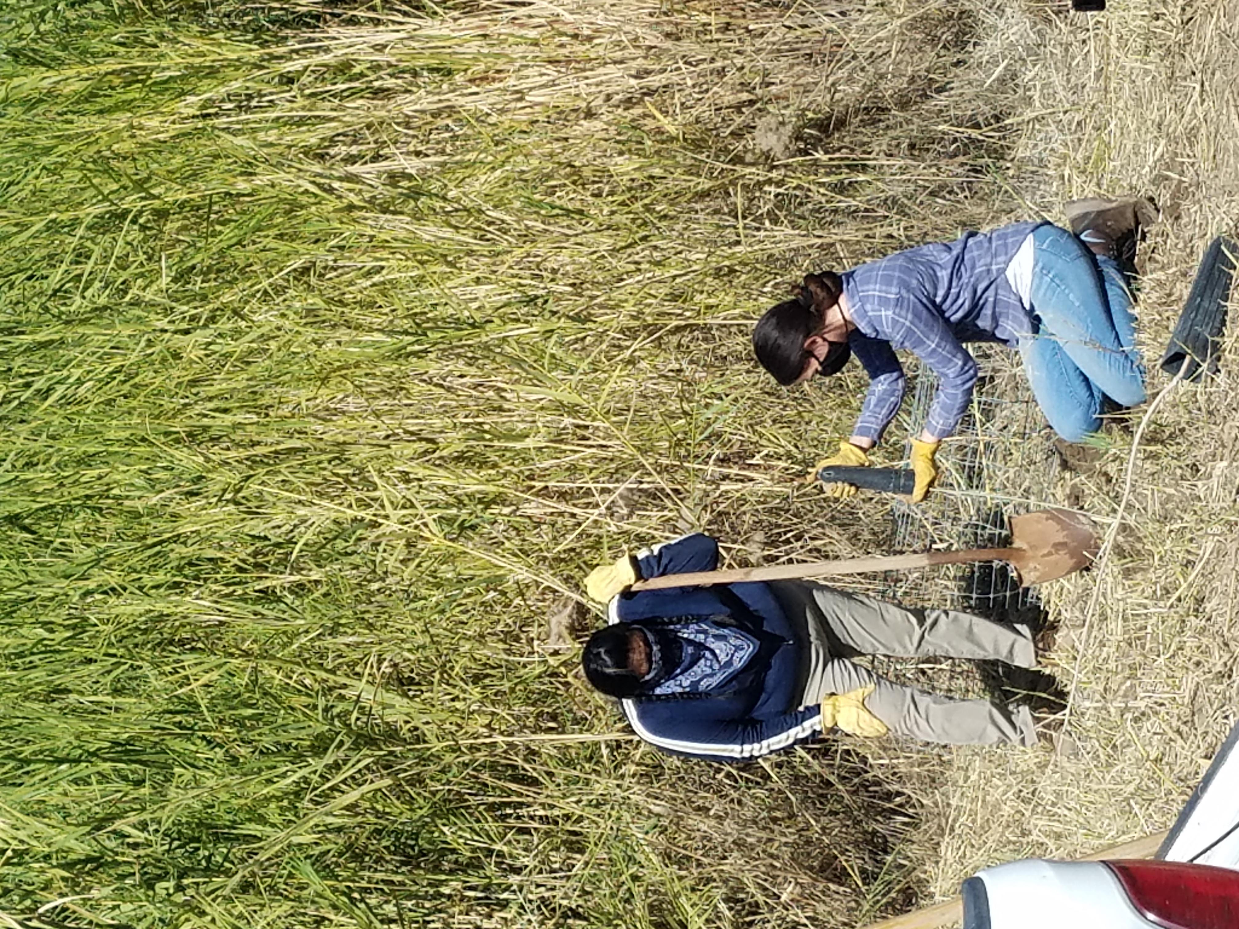 Willa Thomas y Jennifer Alspach de la Oficina de Protección Ambiental de Cocopah plantan uno de los doscientos árboles comprados a la tribu indígena del río Colorado. Foto: Sociedad Audubon de Yuma